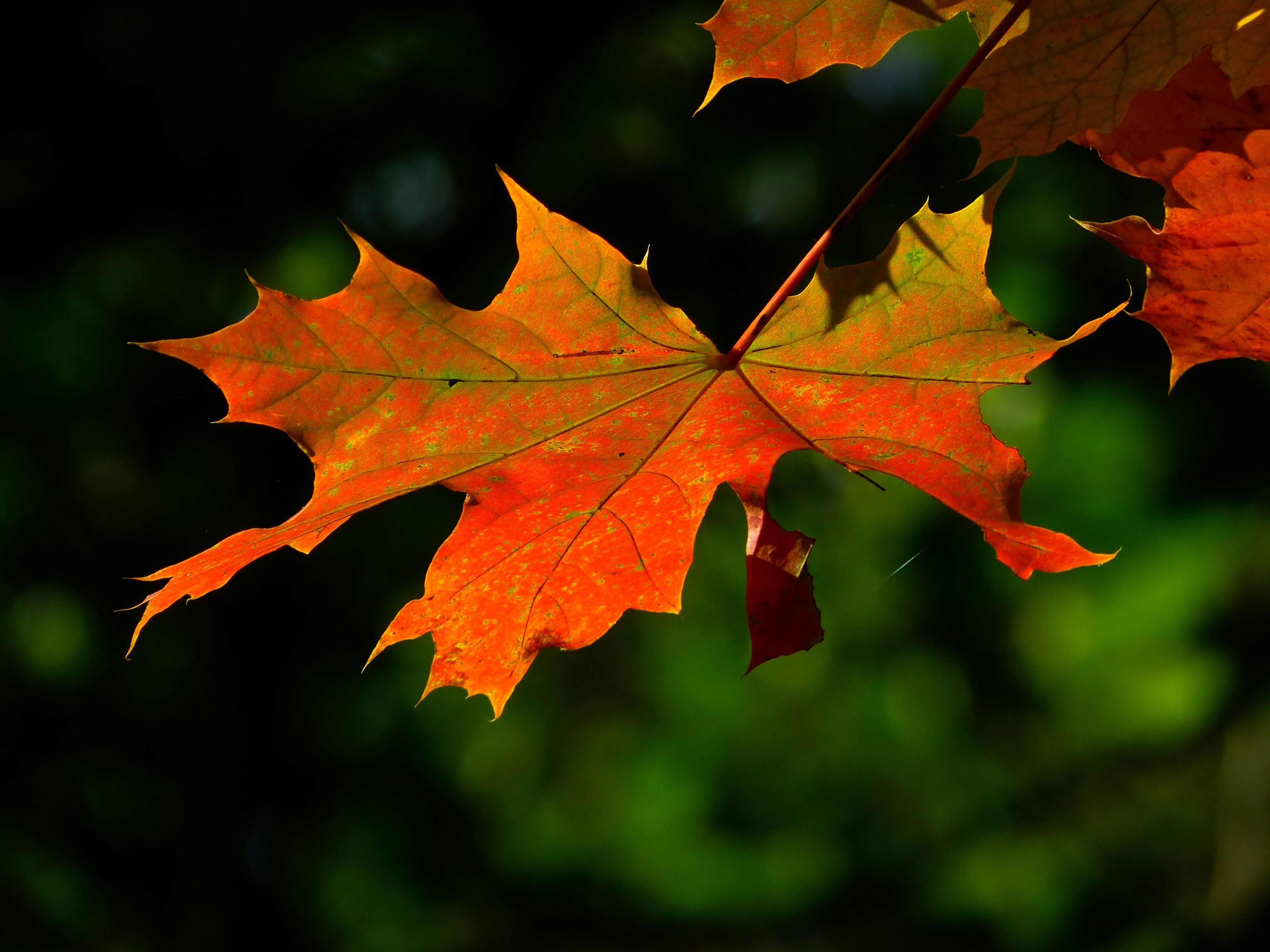Free Images : nature, branch, flower, color, autumn ...
