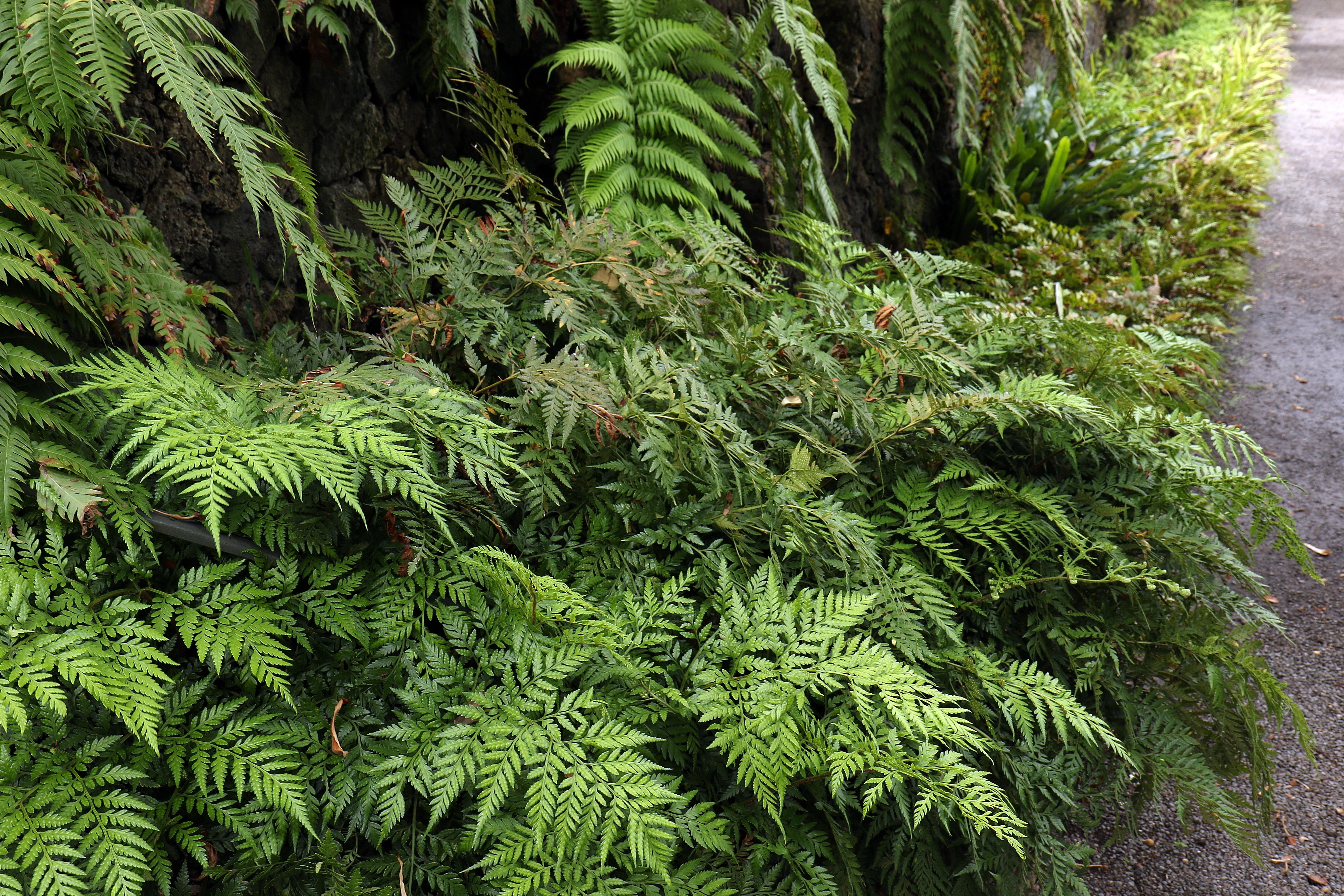 Images gratuites arbre la nature branche plante for Plante arbuste
