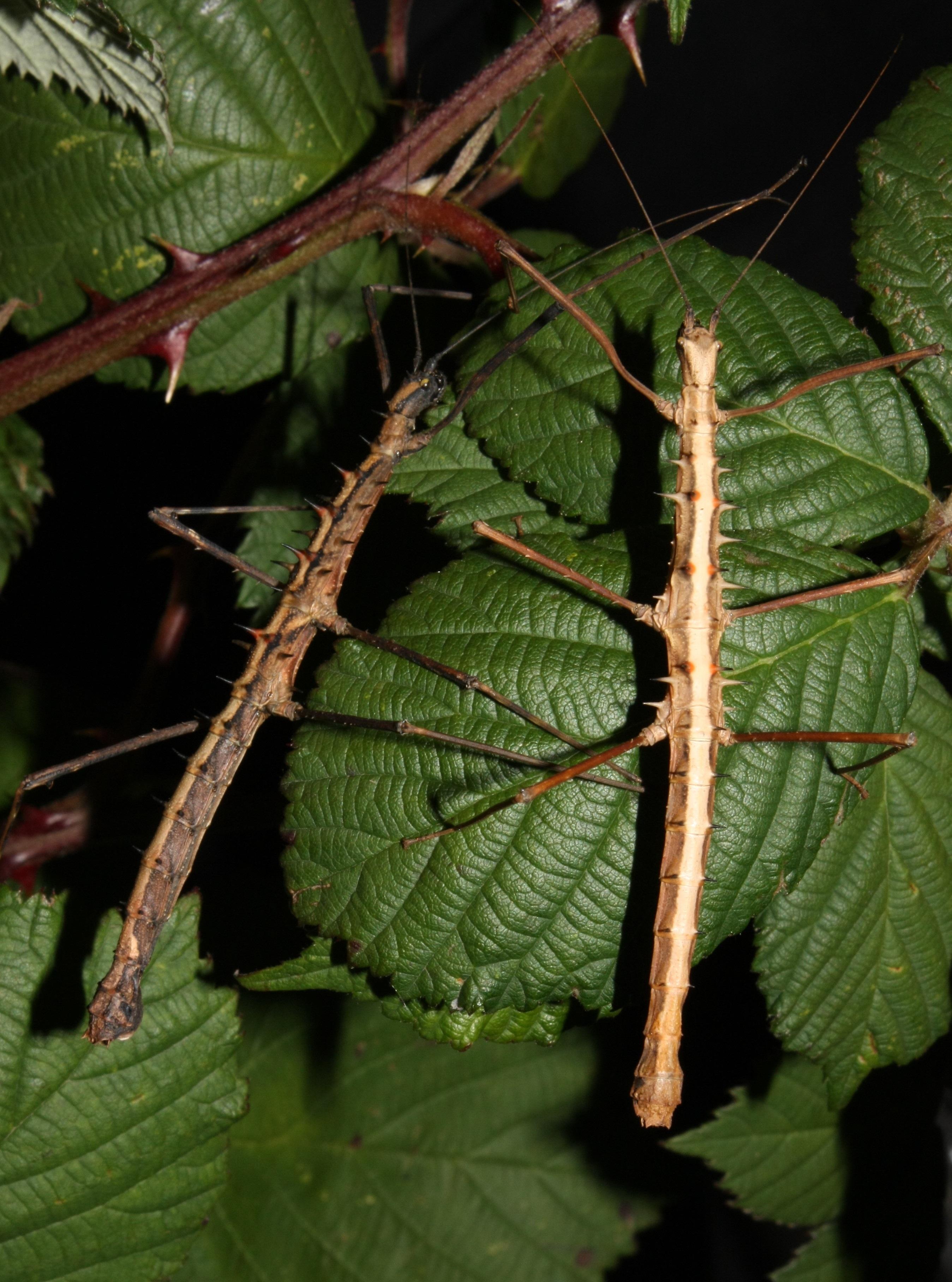 Gratis Billeder Tr 230 Natur Afdeling Plante Blad
