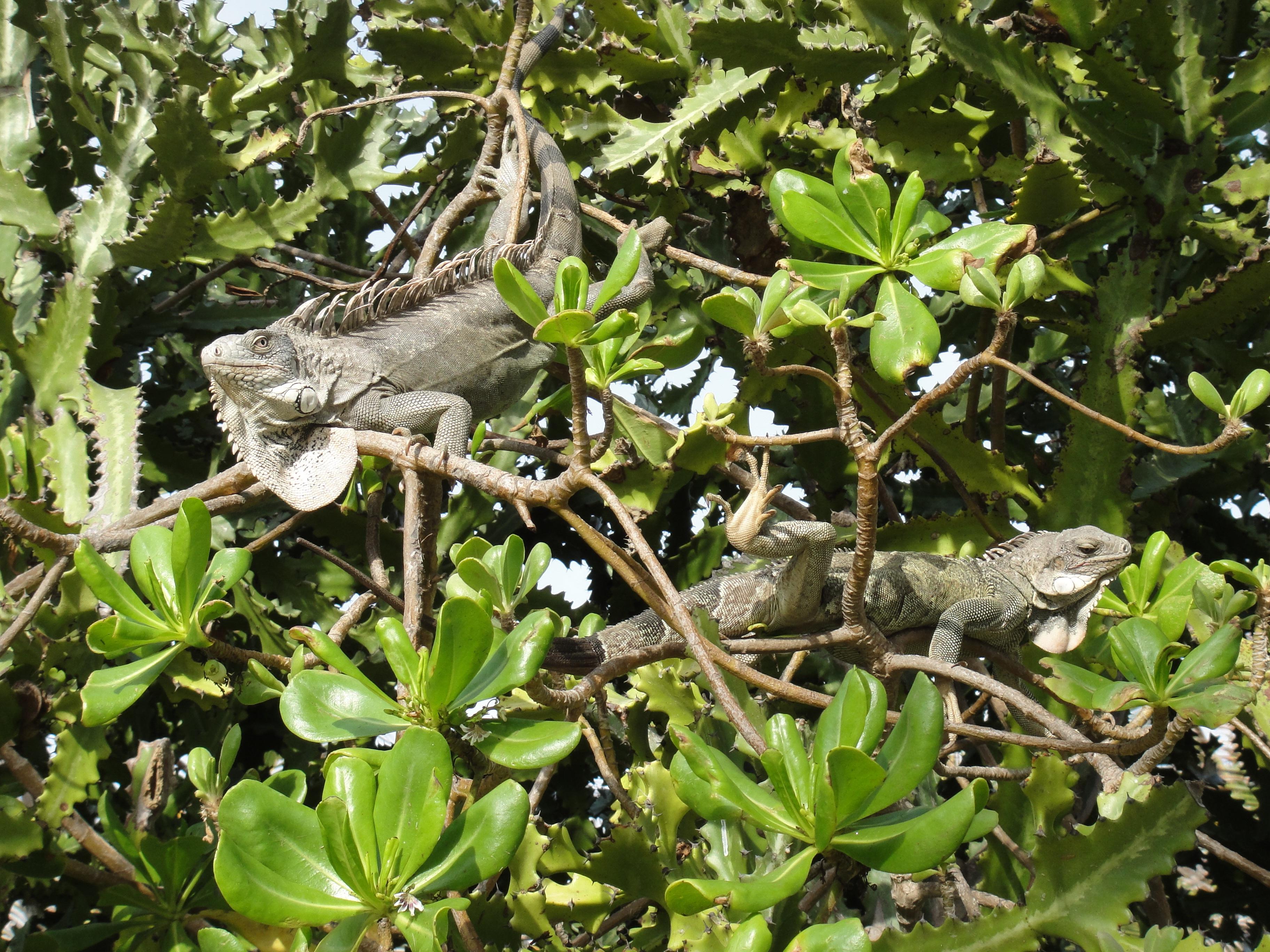 Images gratuites arbre la nature branche feuille for Plante ligneuse