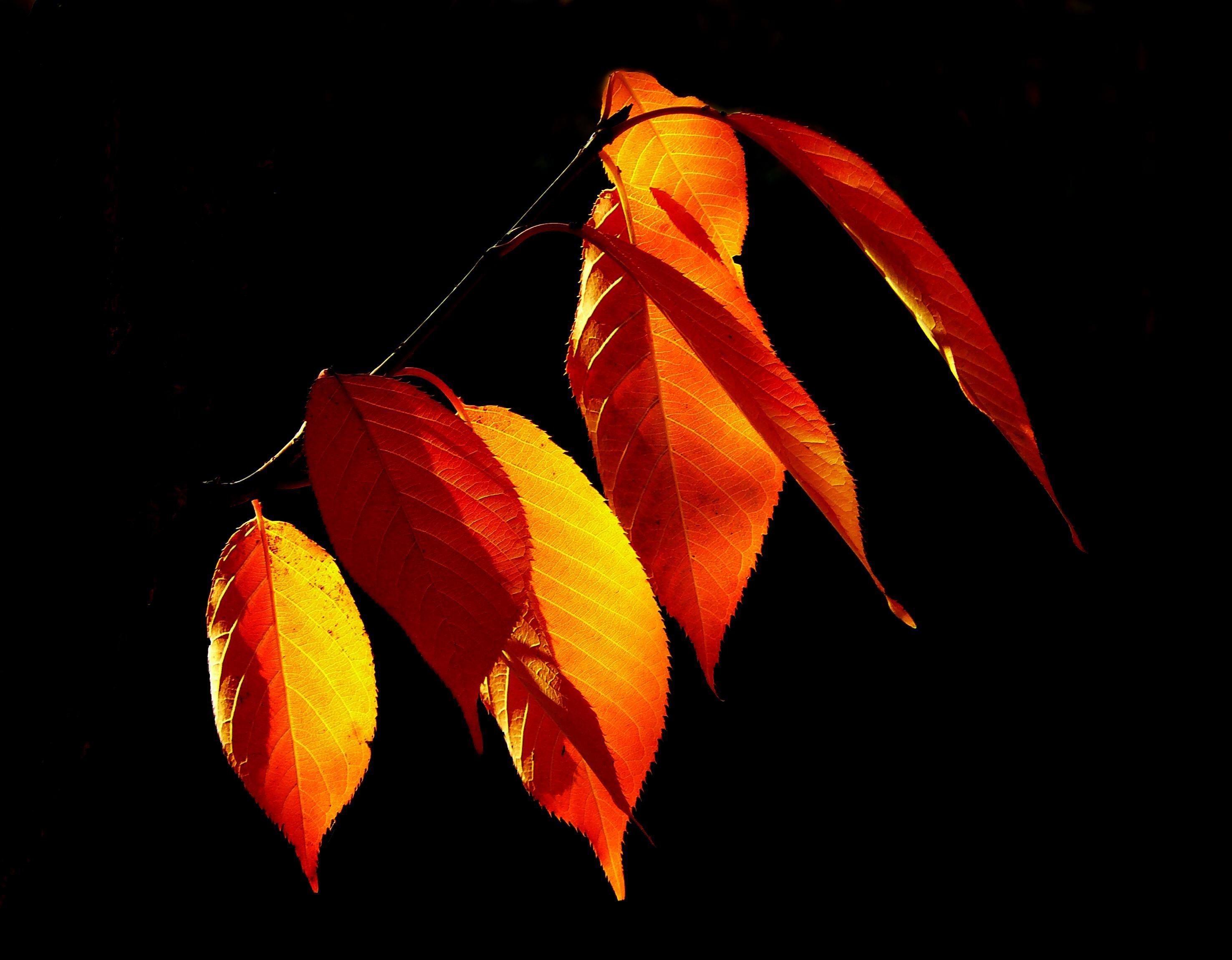 Free Images : tree, nature, flower, petal, atmosphere, orange, red ...