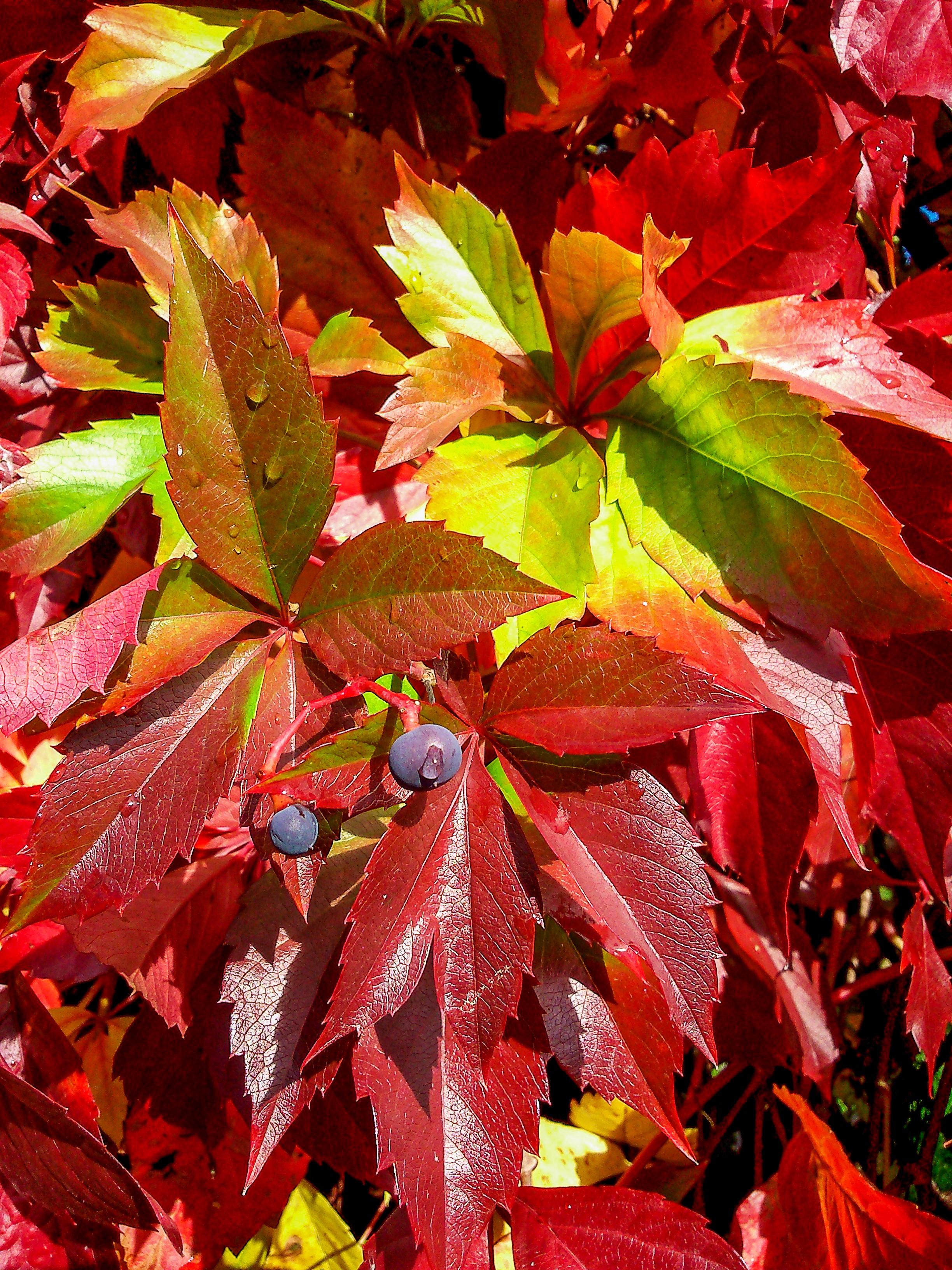 Free Images : branch, flower, petal, flora, season, maple tree ...