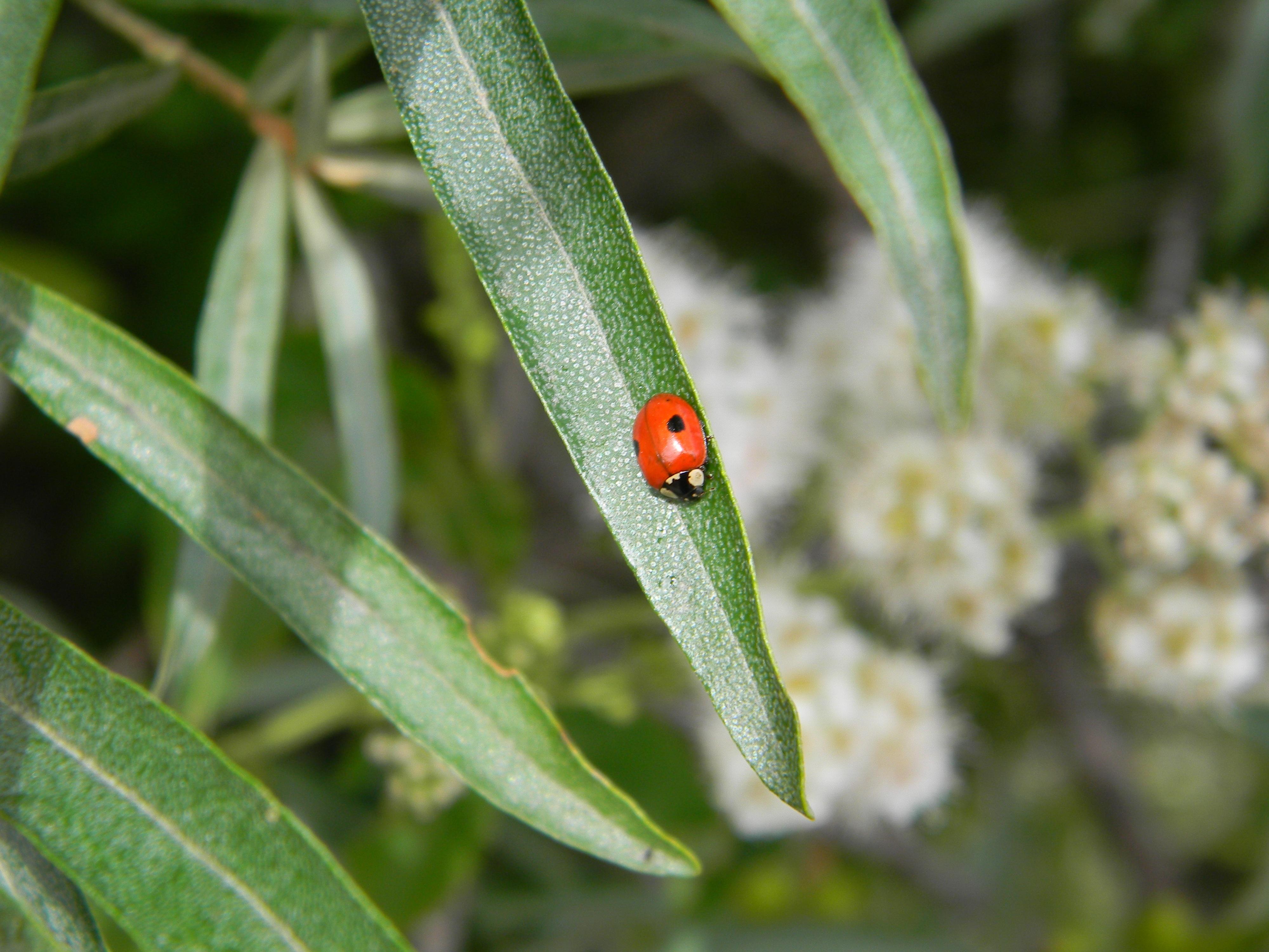 Fotos gratis rbol naturaleza rama planta hoja flor - Plantas para ahuyentar insectos ...