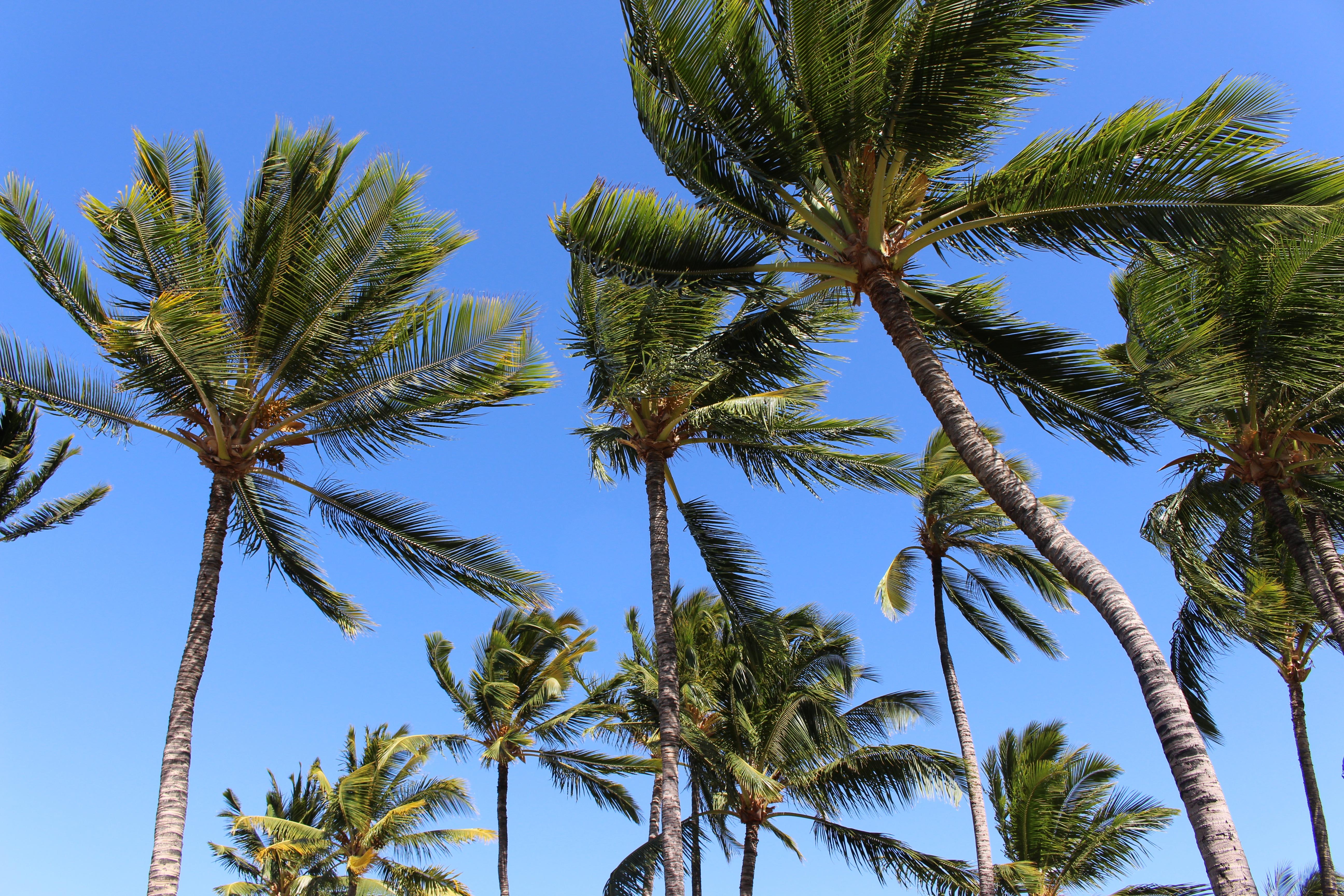 Havaijin dating sites