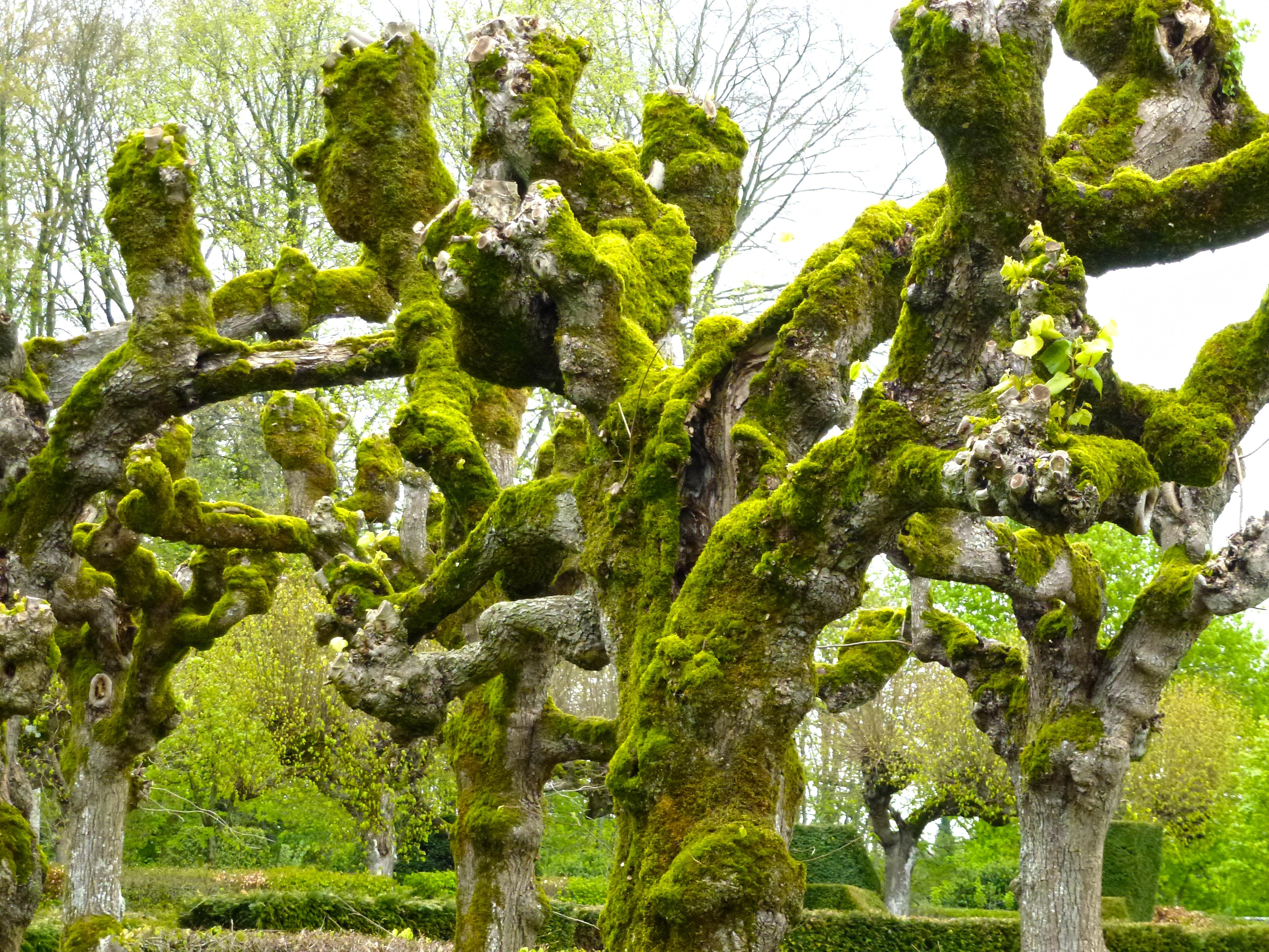 Images gratuites arbre la nature branche feuille - Arbres a feuilles caduques ...