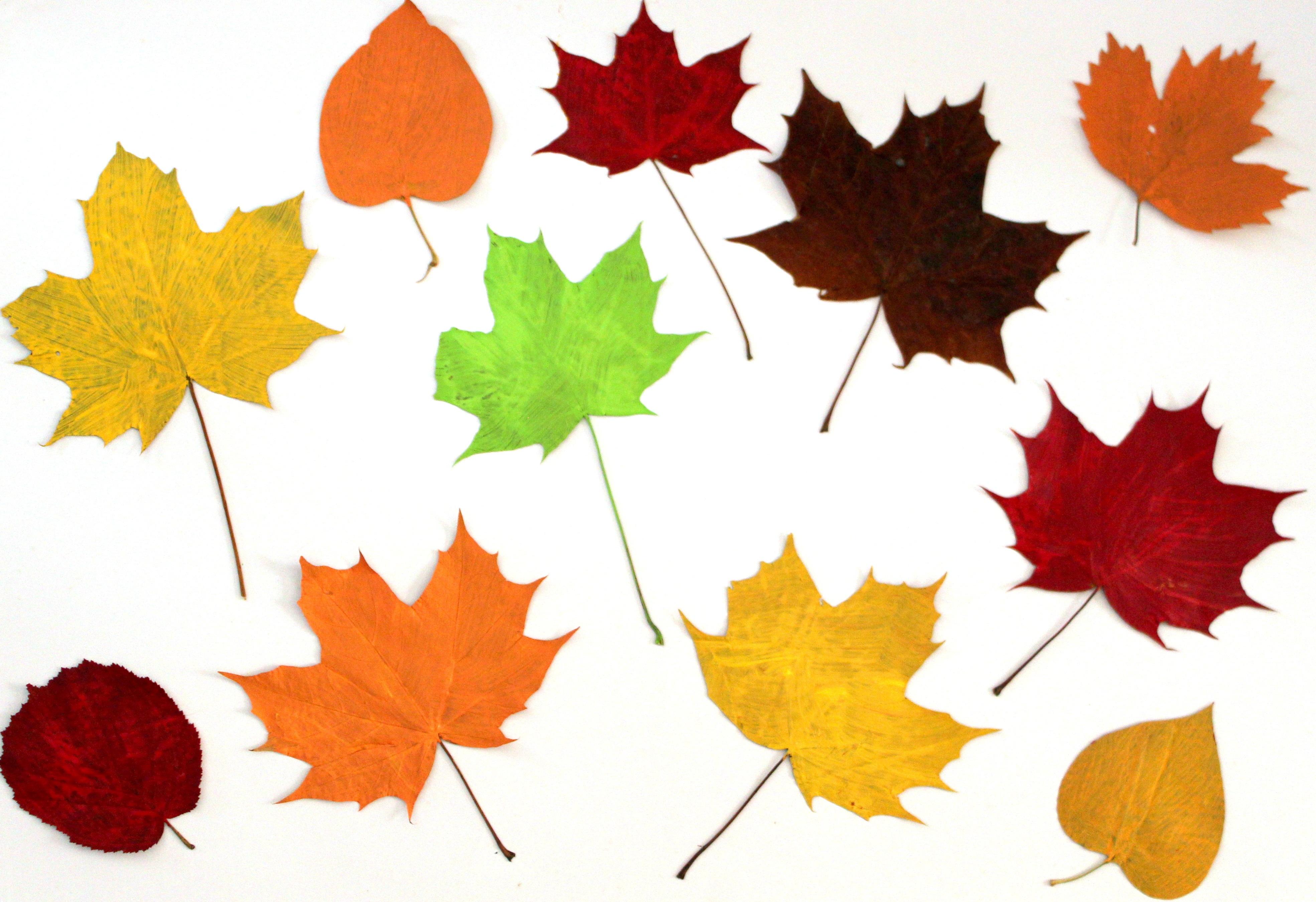 Fotos gratis : naturaleza, rama, antiguo, joven, verde, Produce ...