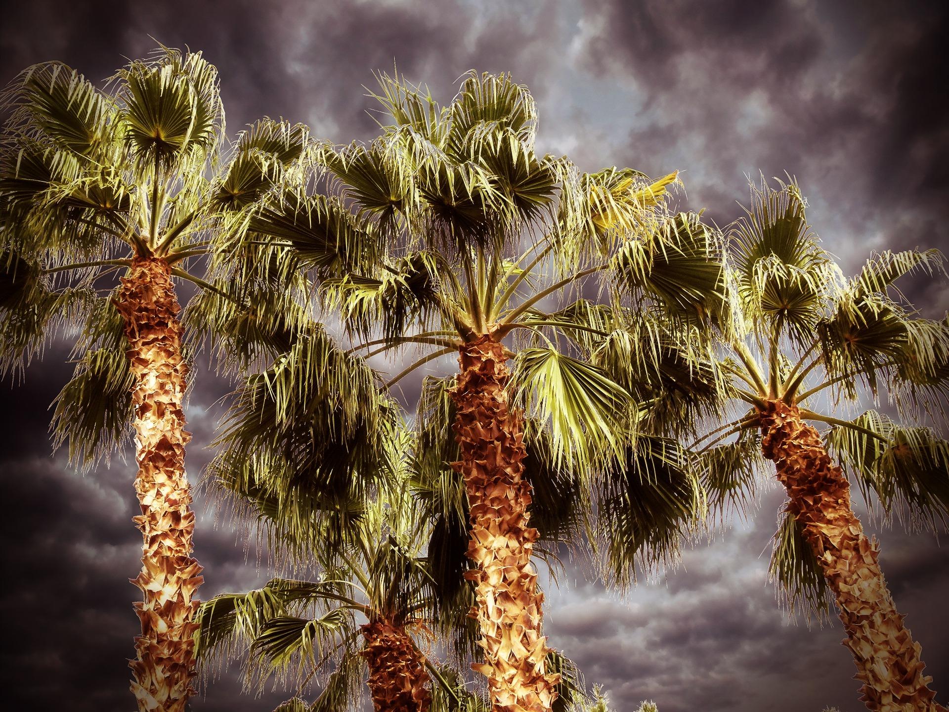 пальмовые деревья картинки советские