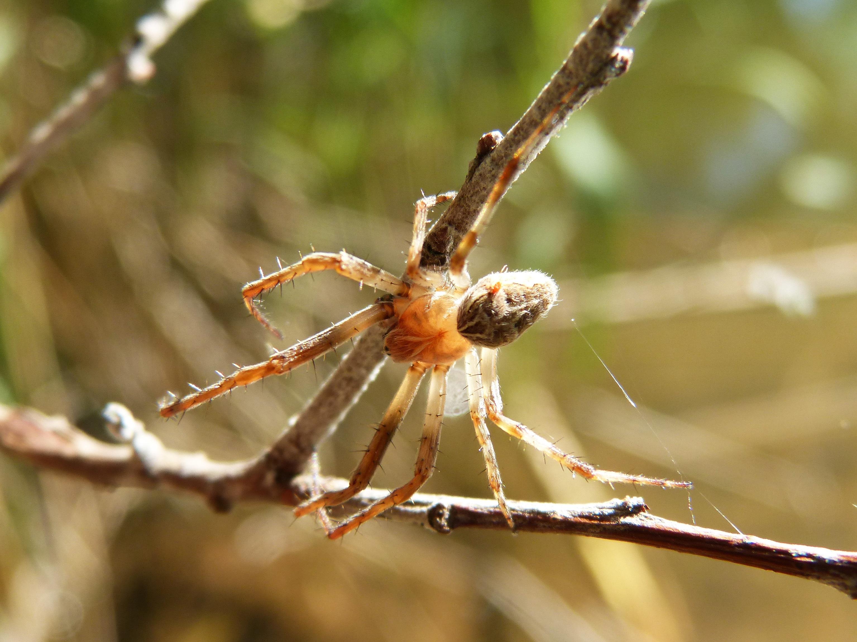 сентябре интересные фото пауков местной