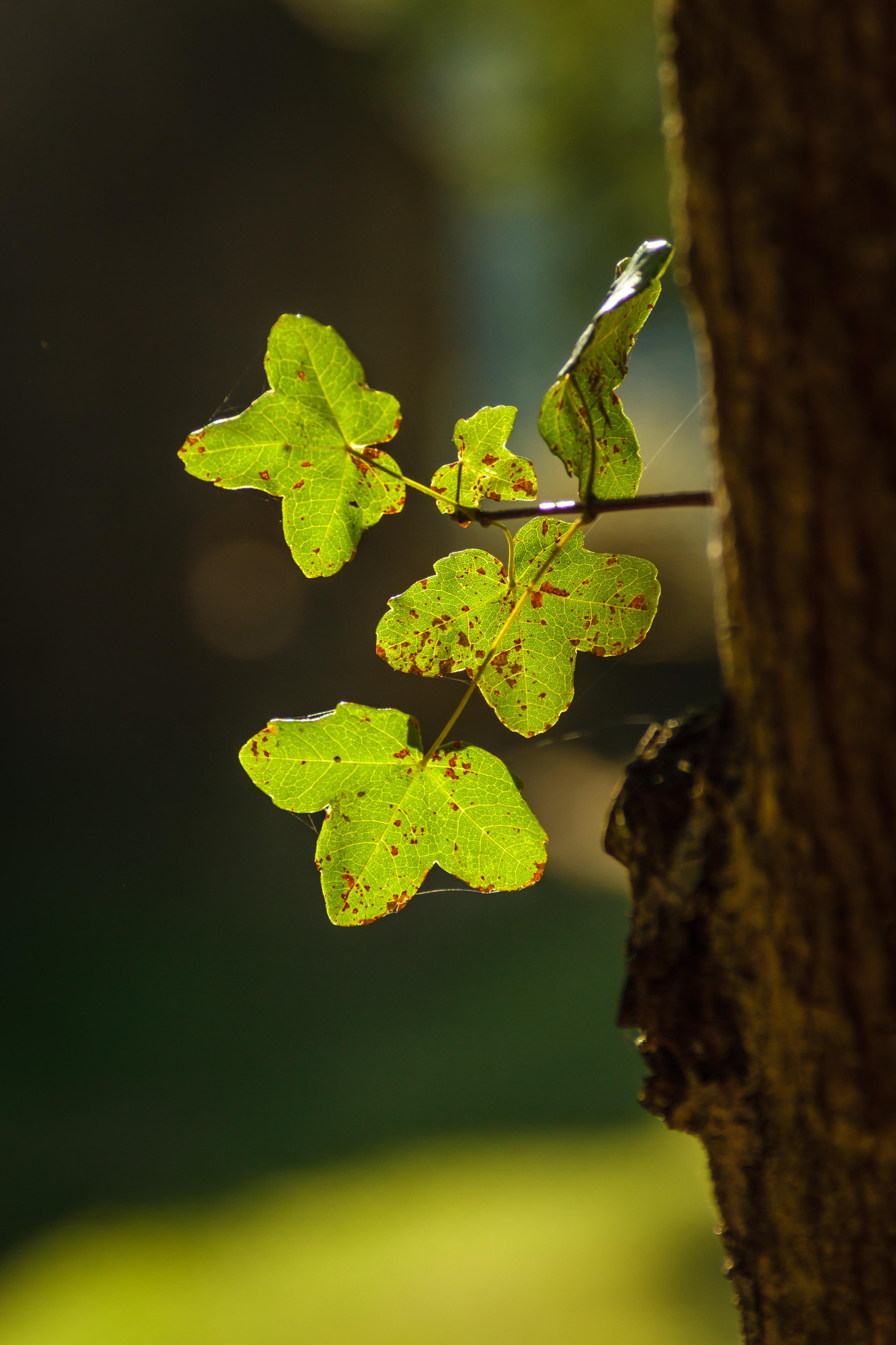 Free Images : tree, nature, branch, grain, sunlight, leaf, flower ...