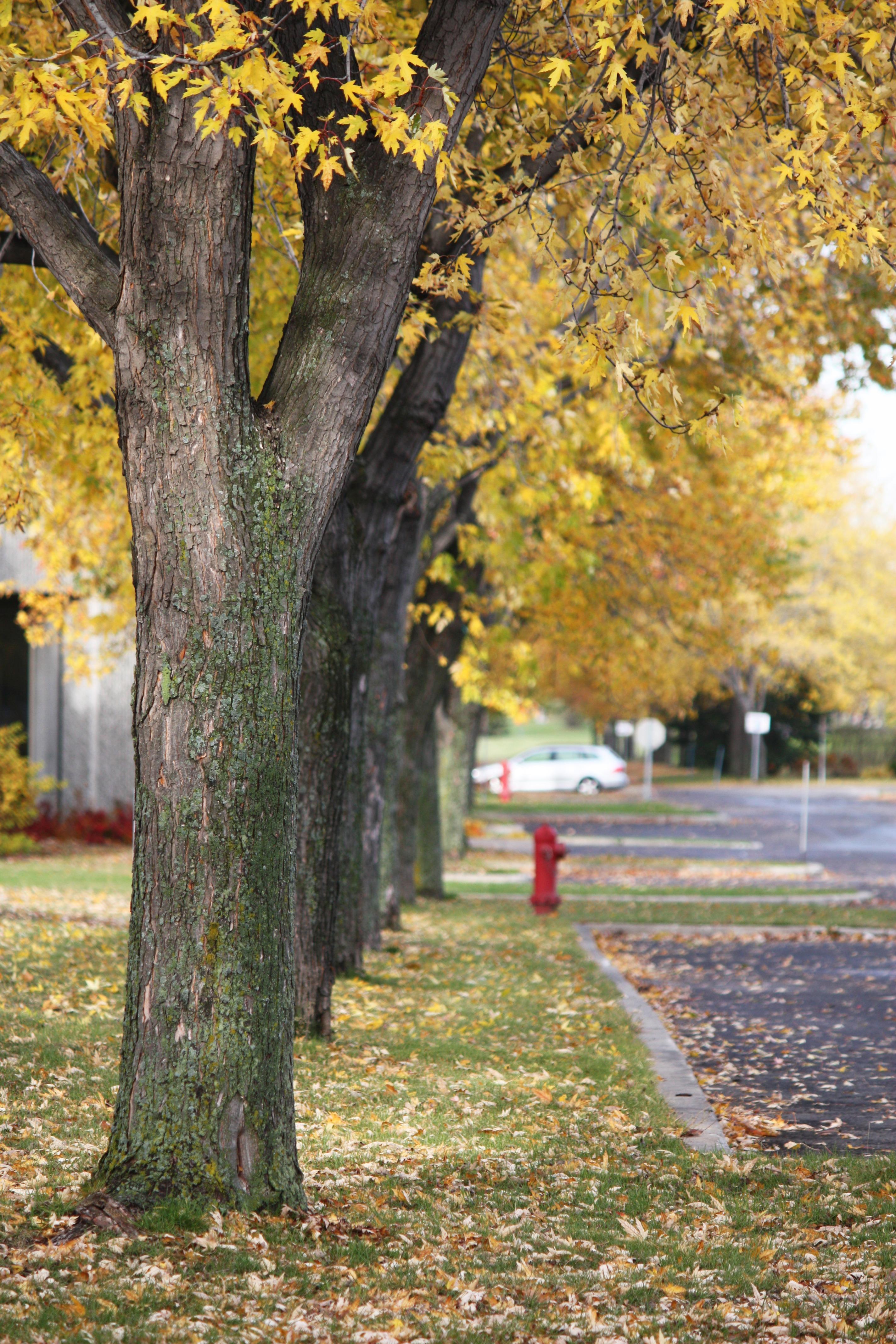 политикой, картинки деревьев на улицах борщ