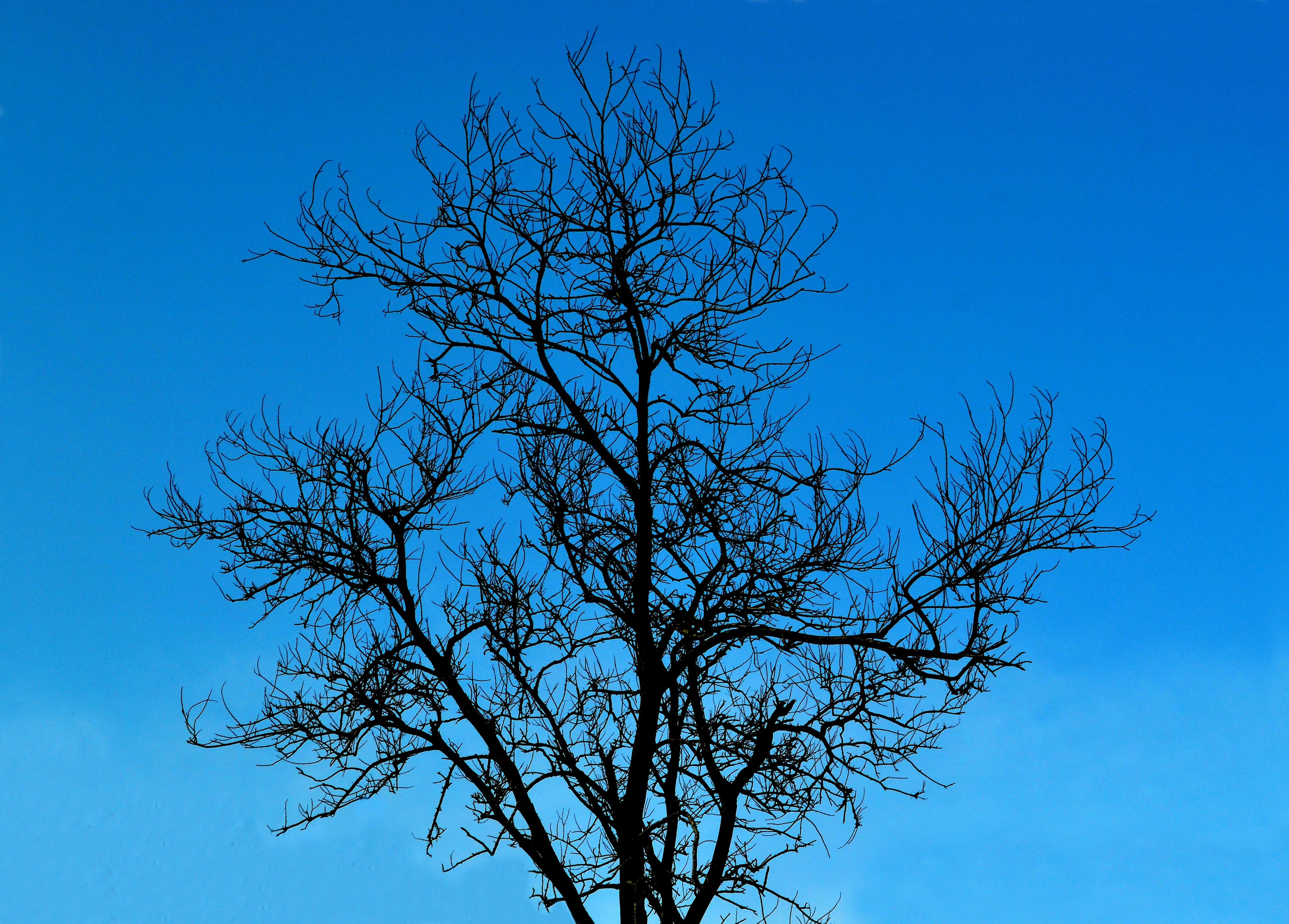 ствол кленового дерева картинки сечения