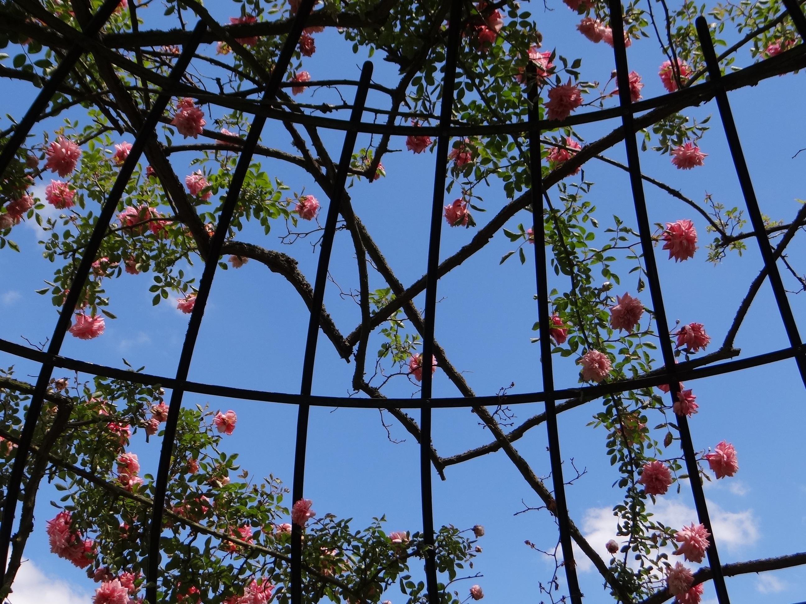 Fotos gratis : árbol, naturaleza, rama, planta, cielo, sol, hoja ...
