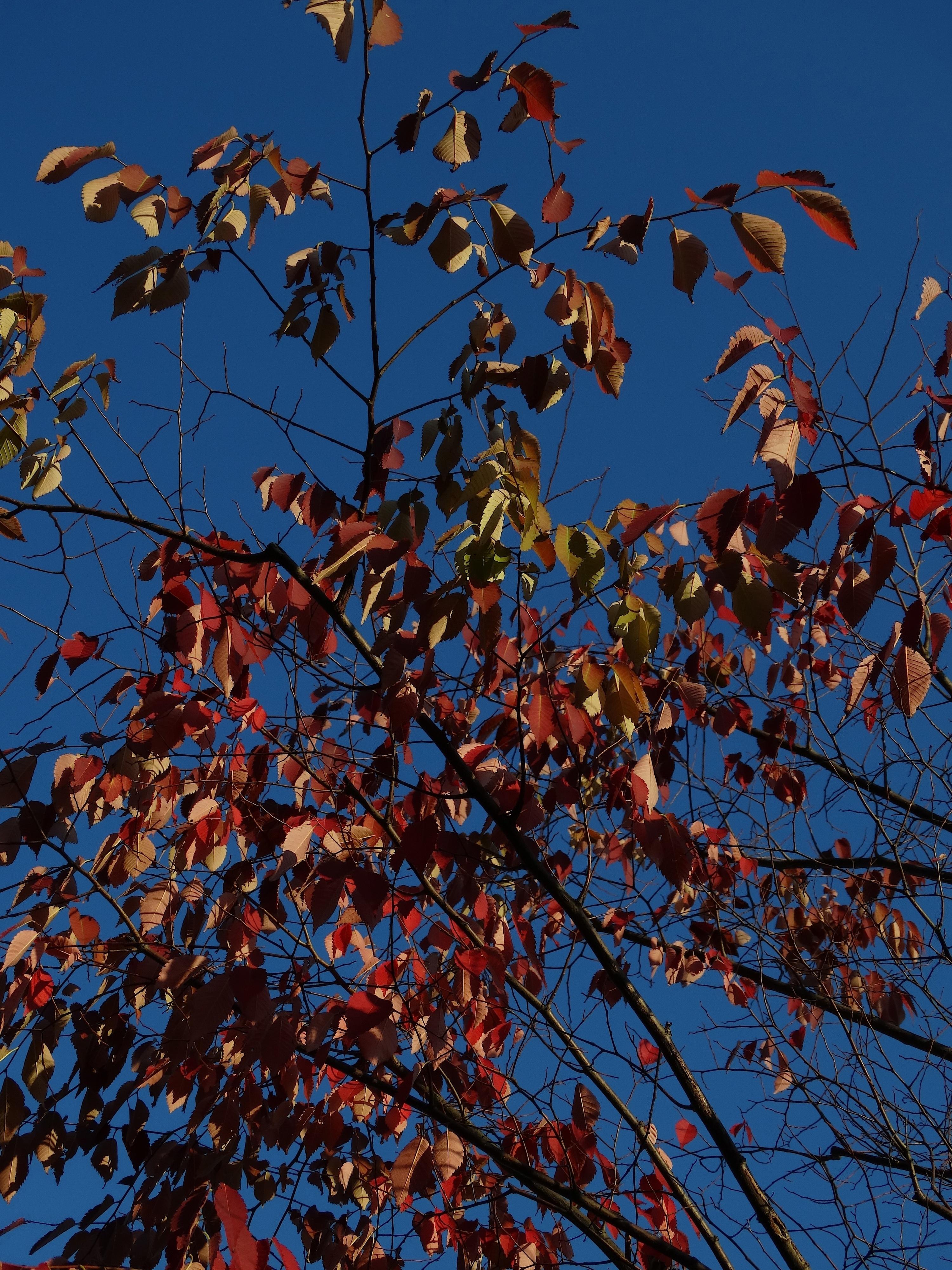 Kostenlose foto : Baum, Natur, Ast, Sonnenlicht, Blatt, Blume, Grün ...