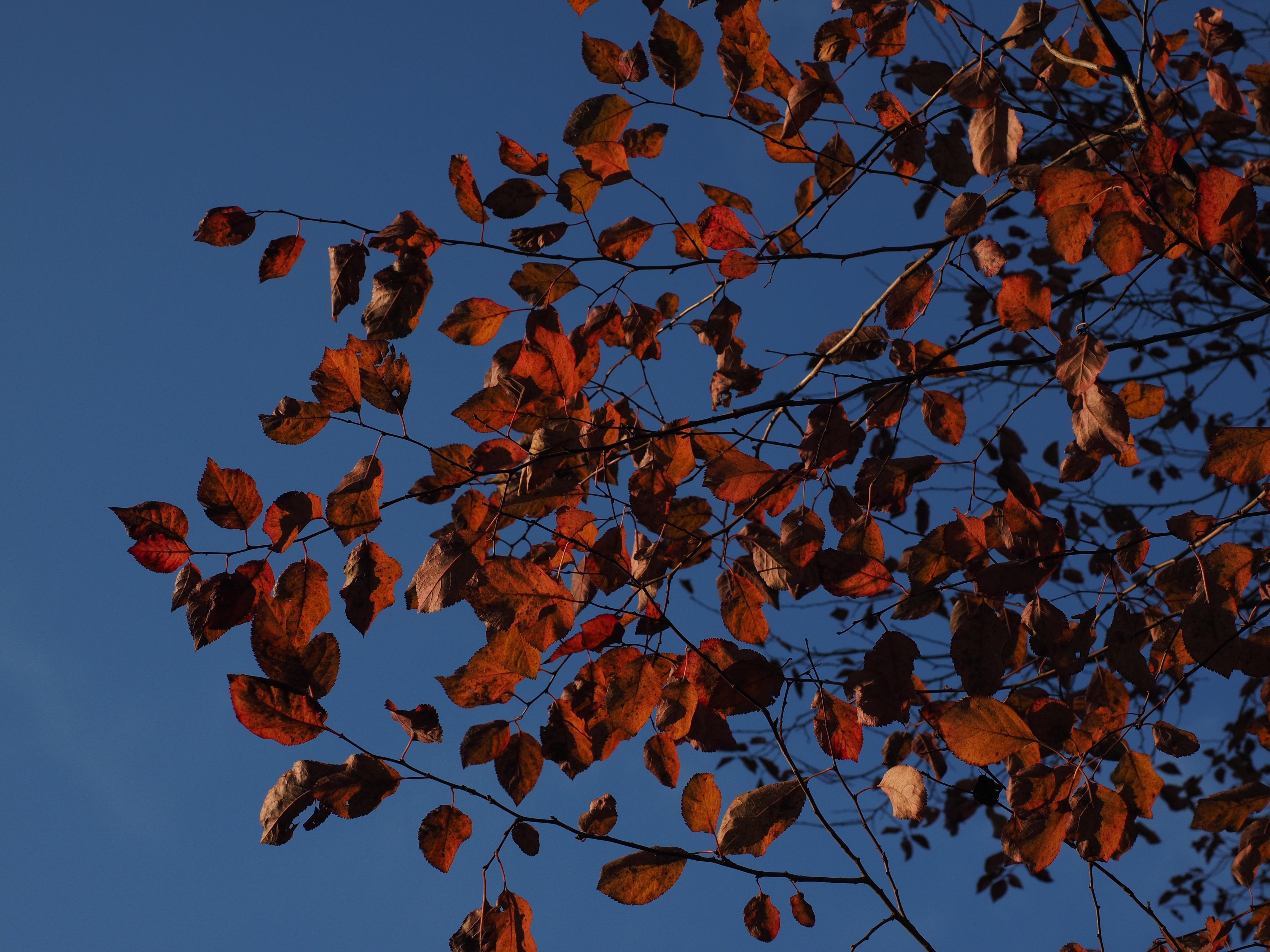Free Fotobanka Priroda Vetev Rostlina Nebe Slunecnim Svetlem