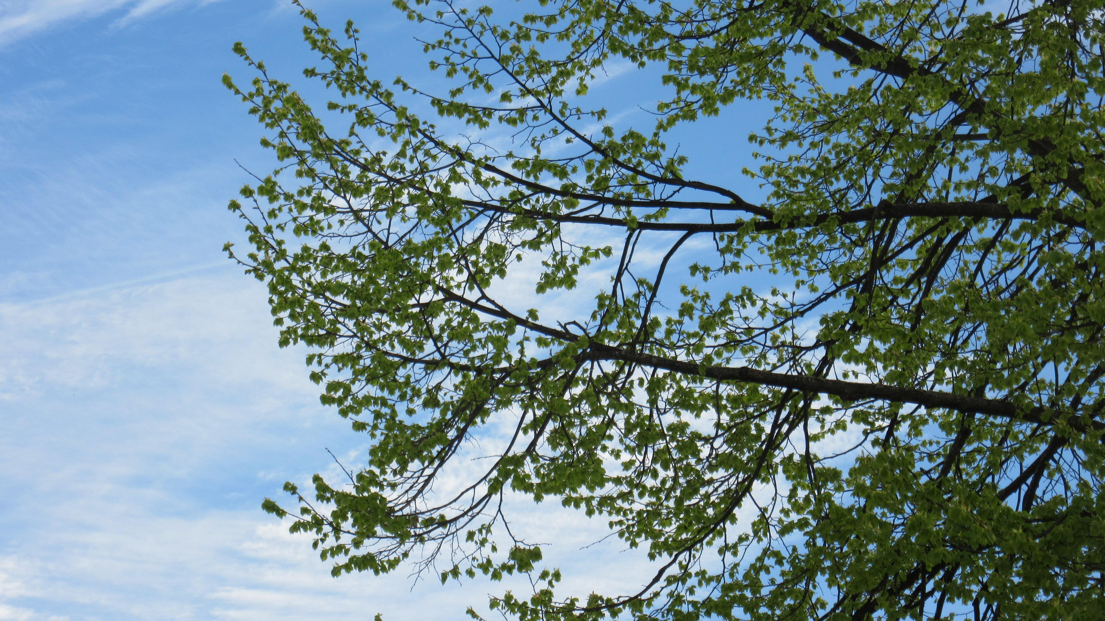 Fotos gratis : árbol, naturaleza, rama, cielo, luz de sol, hoja ...