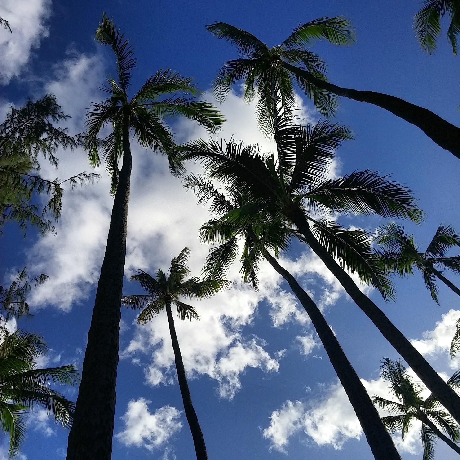 уютный длинные картинки пальмы время курса узнаете