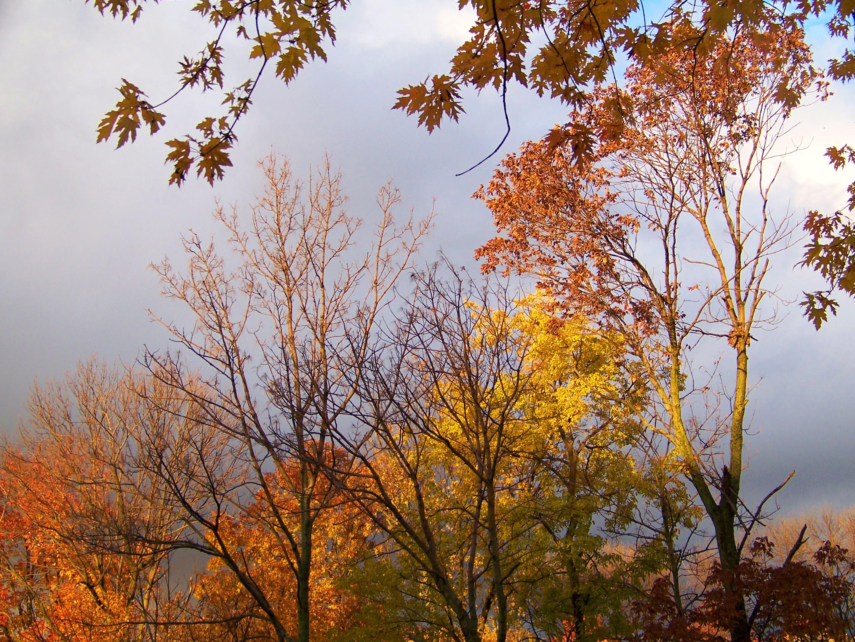 Kostenlose foto : Baum, Natur, Ast, Himmel, Sonnenlicht, Morgen ...