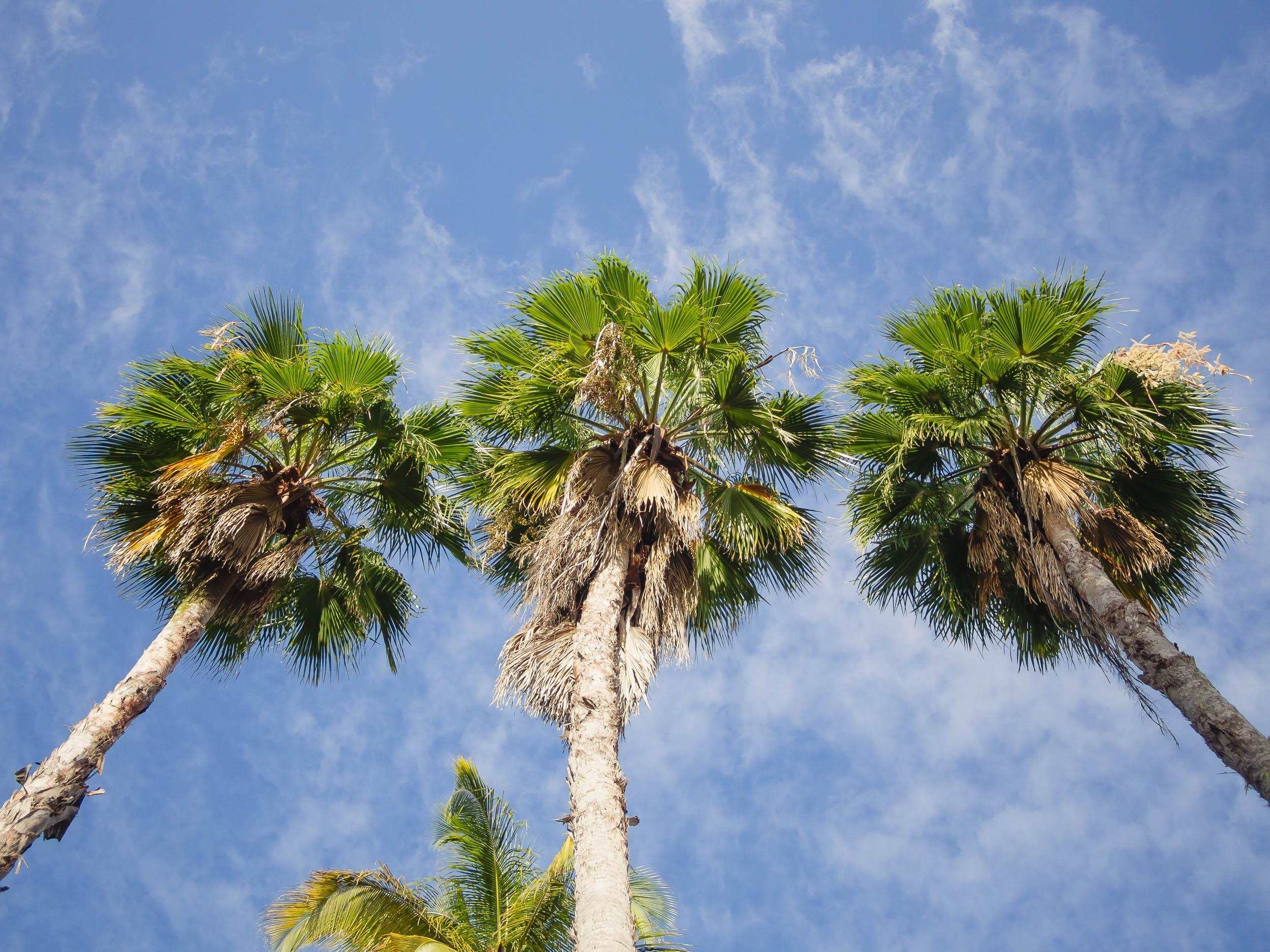 пальмовые деревья картинки интерьер, ванная, свечи