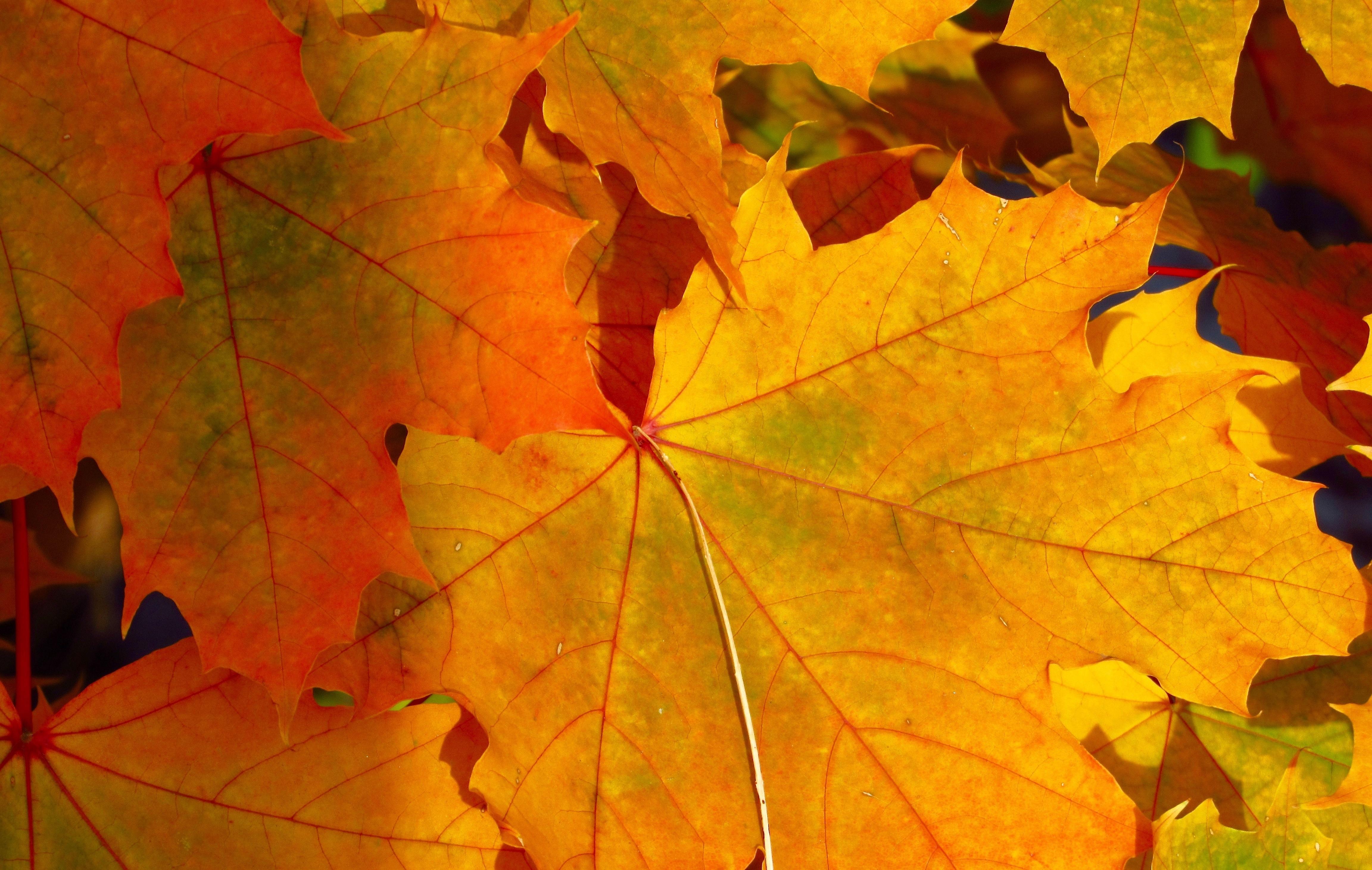 вдруг картинки про листья рамки для