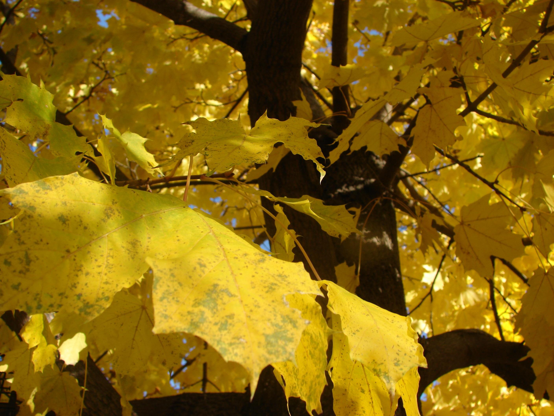 картинки падающий осенний лист вместо