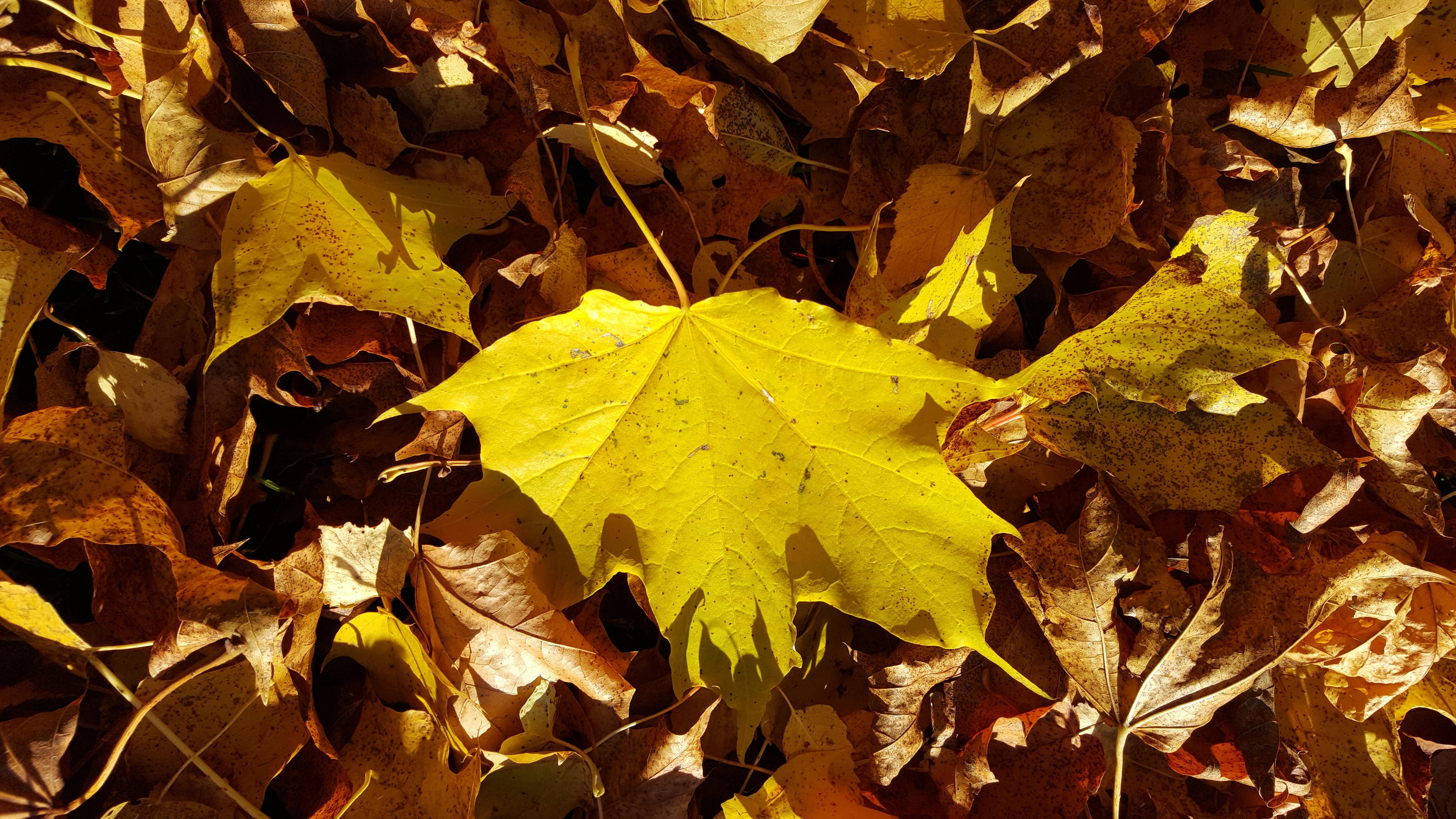 自然褐色_無料画像 : 自然, ブランチ, 工場, 太陽光, 秋, 褐色, 黄, シーズン ...