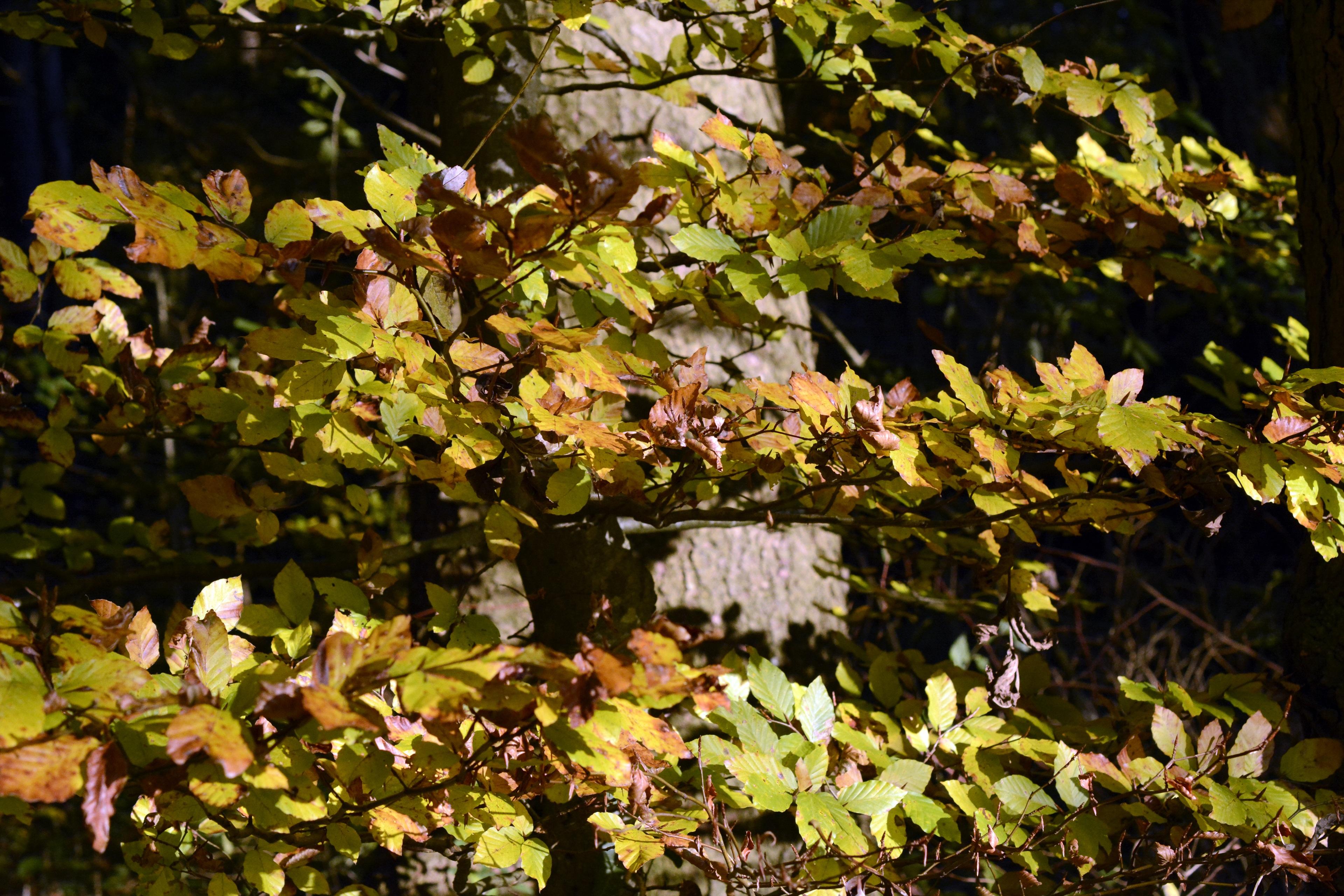 Free Images : nature, branch, sunlight, leaf, flower, botany ...
