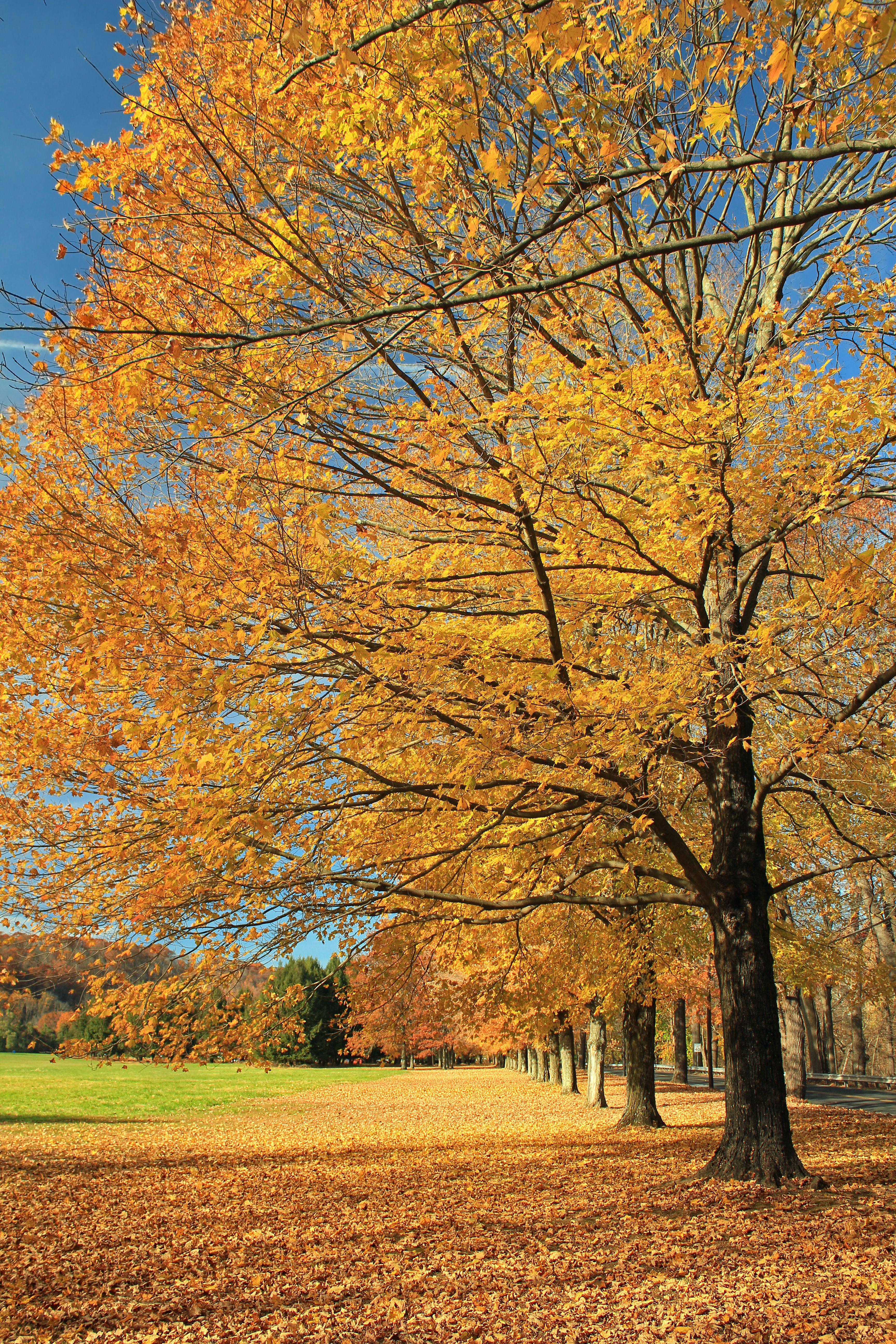 Images gratuites arbre la nature branche lumi re du - Arbres a feuilles caduques ...