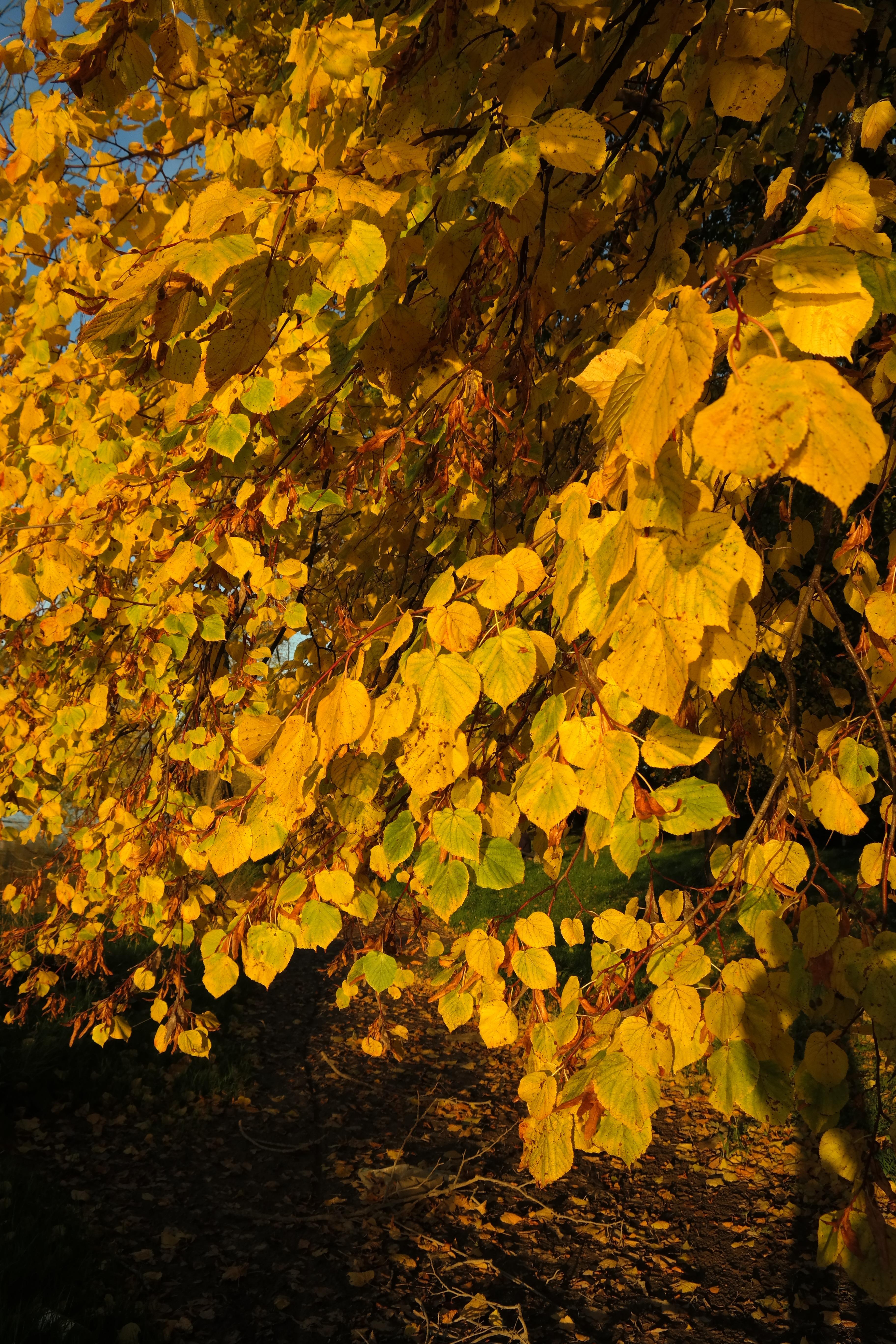 Fotoğraf Doğa şube Güneş ışığı çiçek Yeşillik Sonbahar Sarı