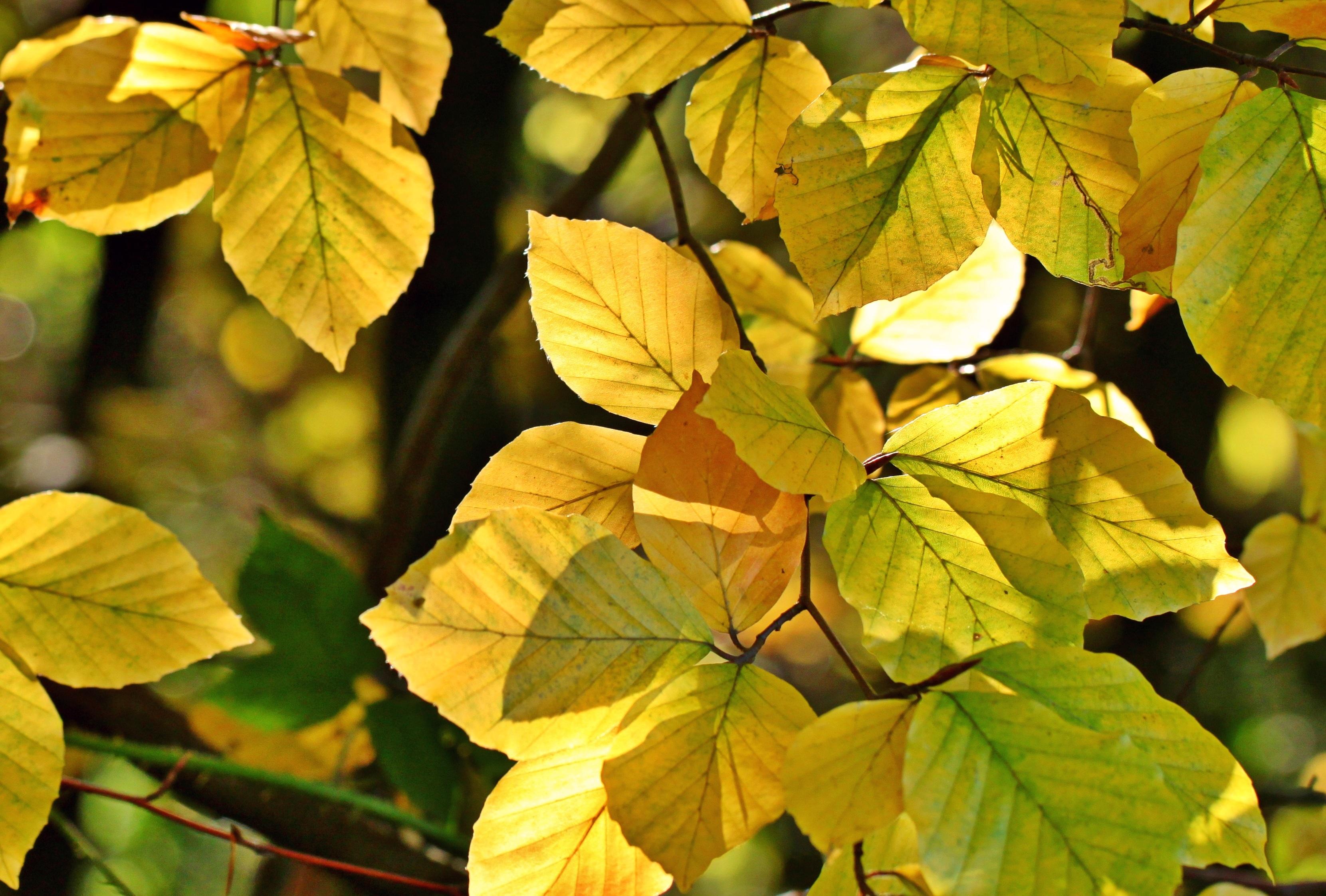 Fotoğraf Ağaç Doğa şube Güneş ışığı çiçek Yeşil Botanik