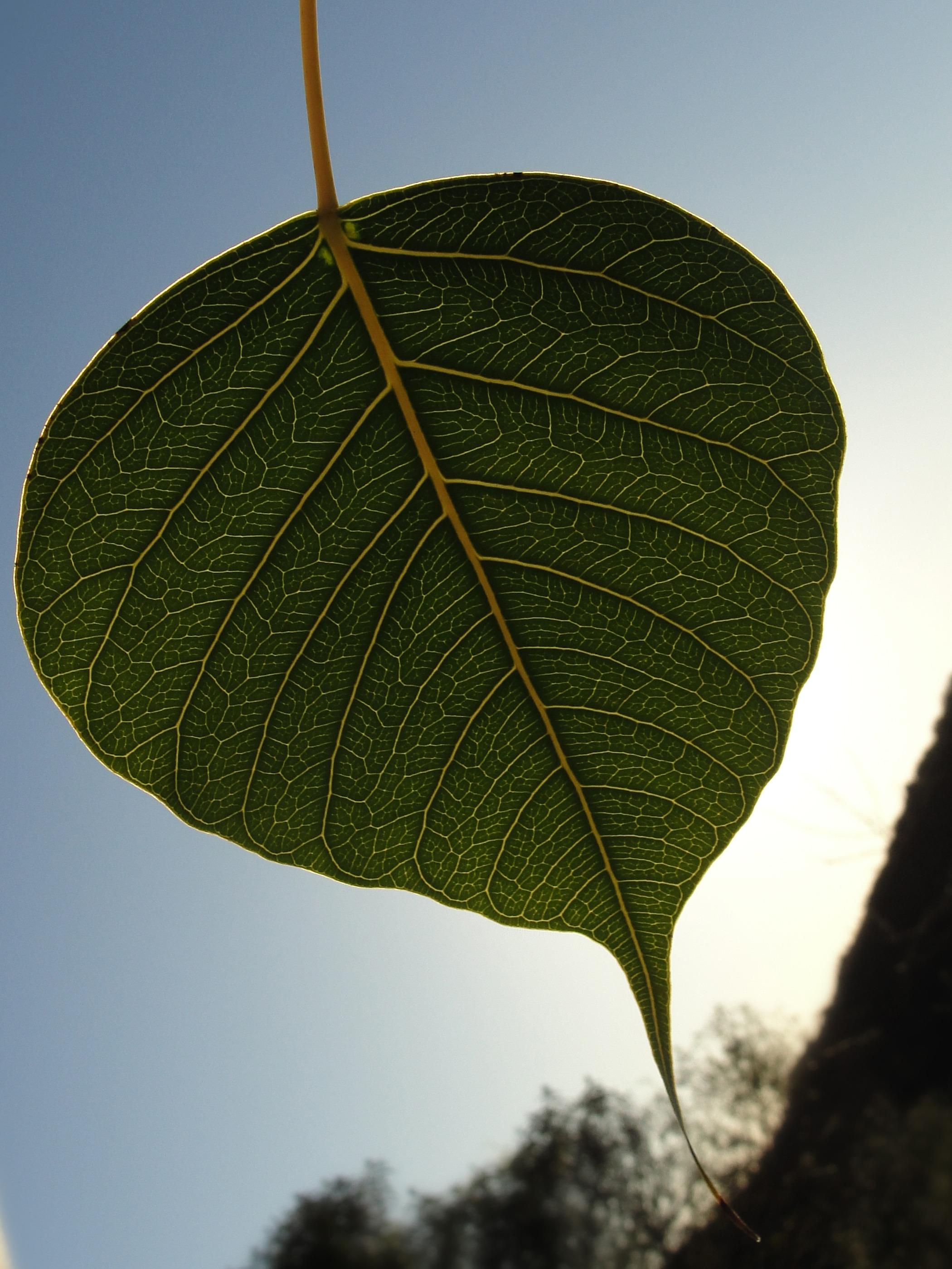 images gratuites arbre la nature branche lumi re du soleil fleur vert l 39 automne. Black Bedroom Furniture Sets. Home Design Ideas