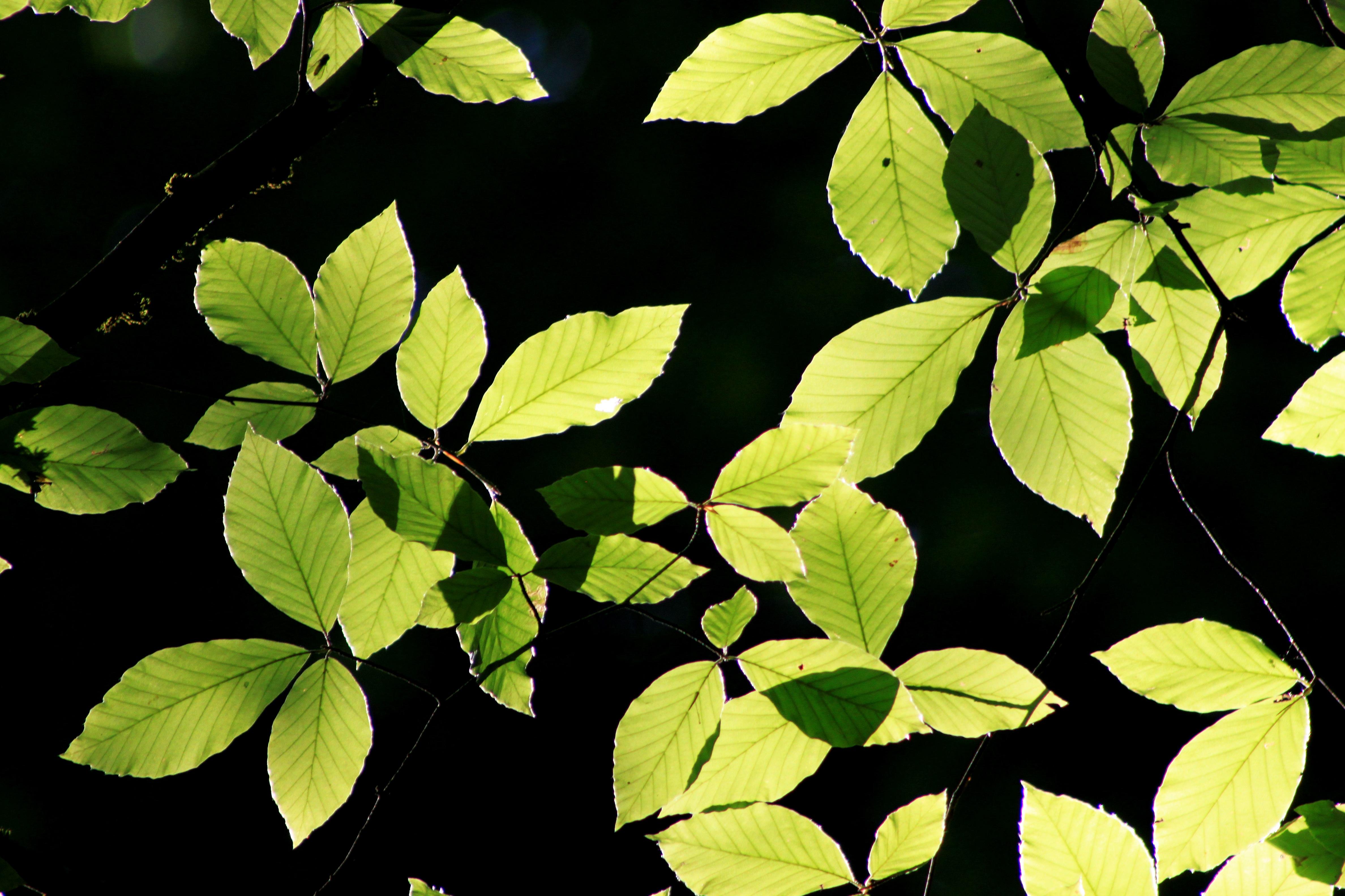plant soy