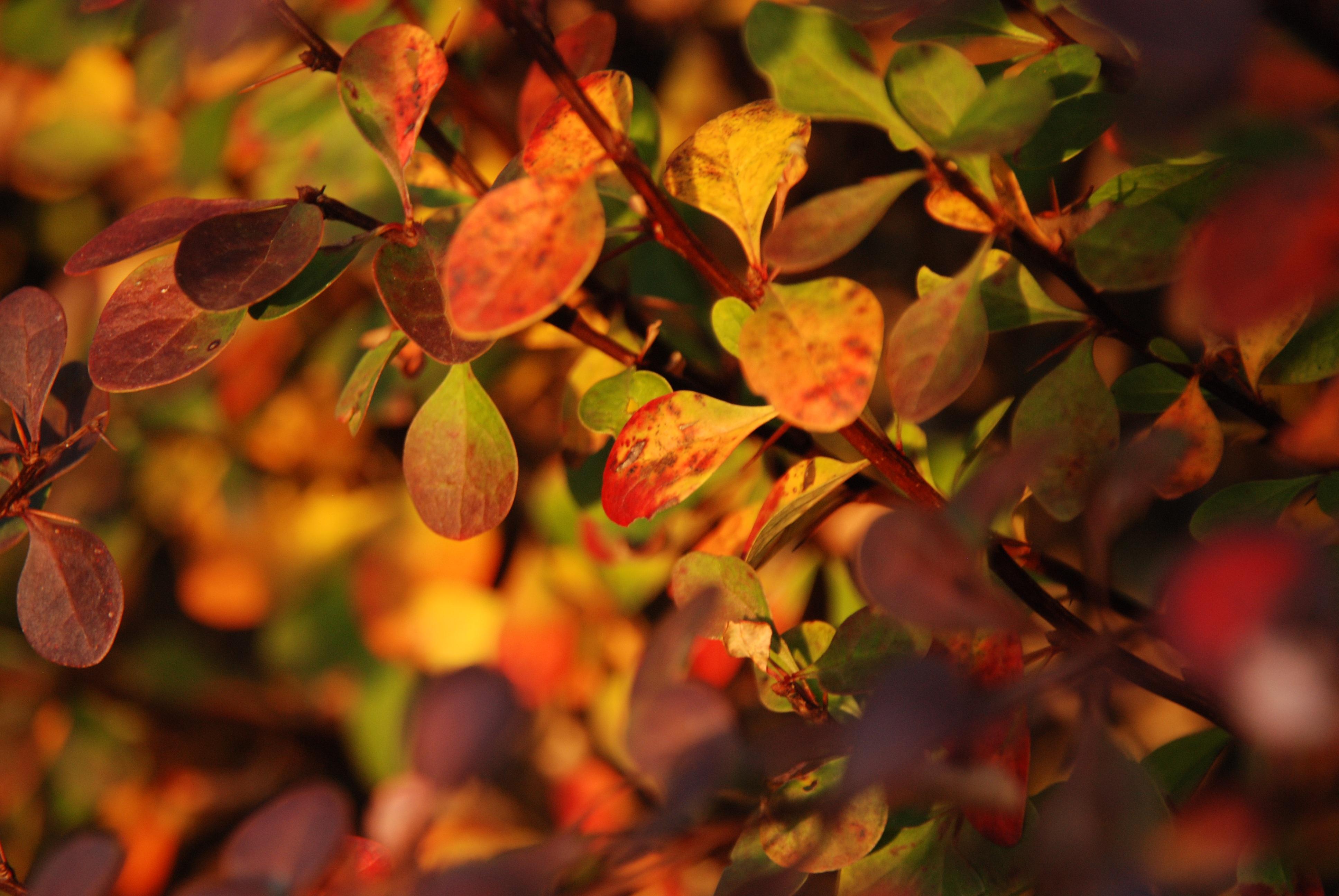 Fotos gratis : árbol, naturaleza, rama, luz de sol, hoja, flor ...
