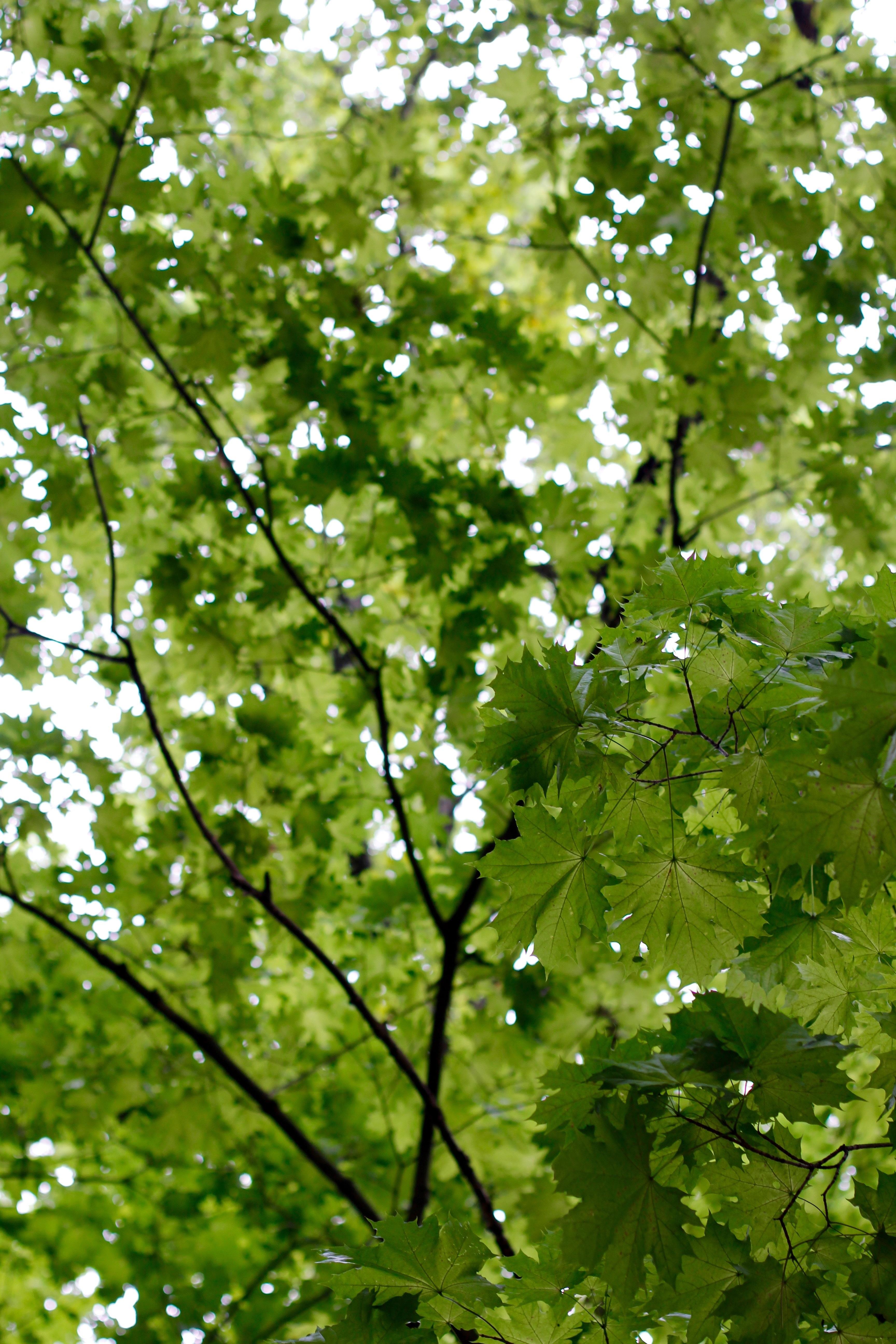 Free Images Nature Branch Sunlight Leaf Flower Log Green