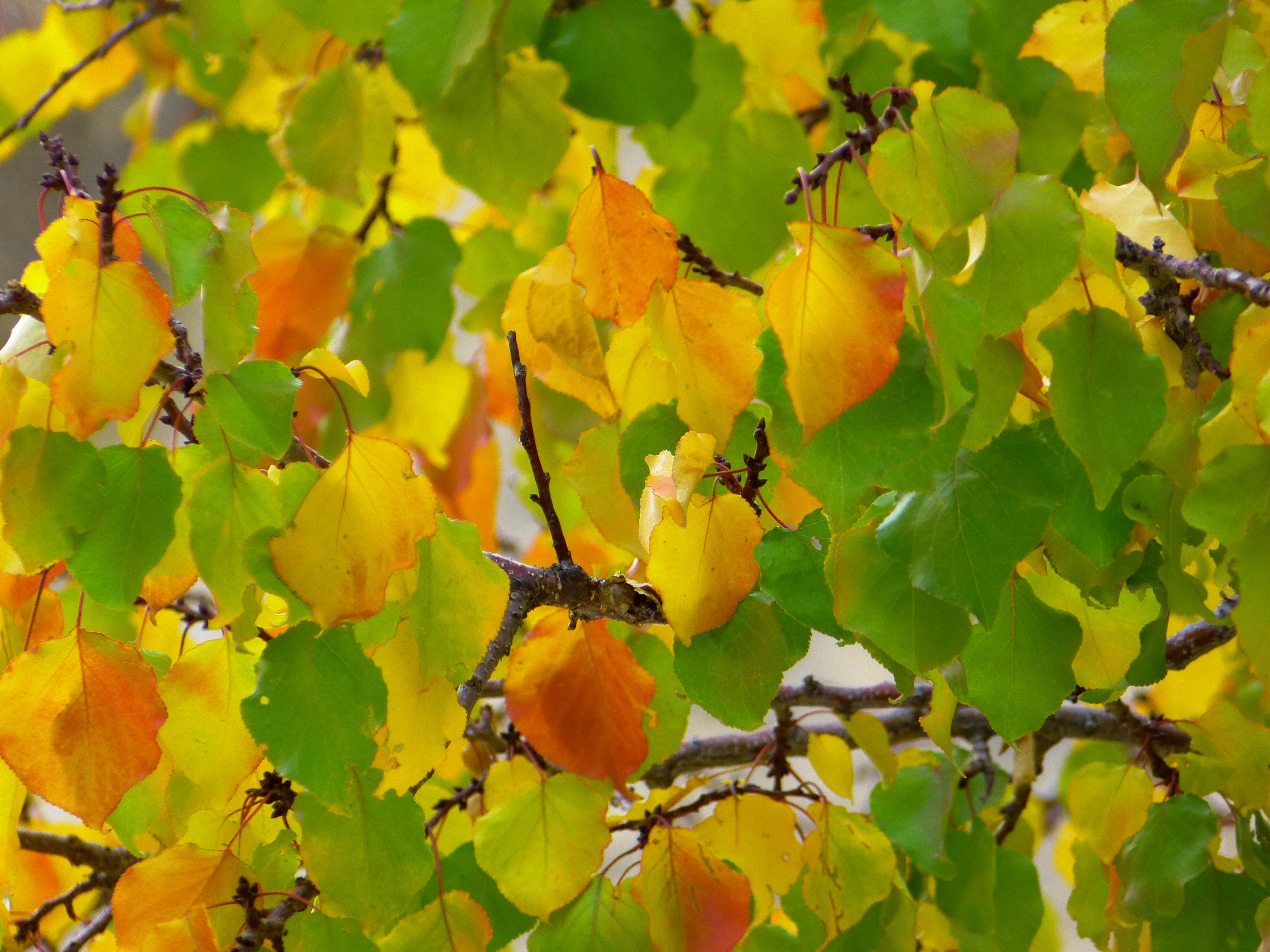 Free Images : nature, branch, sunlight, leaf, flower, orange, food ...
