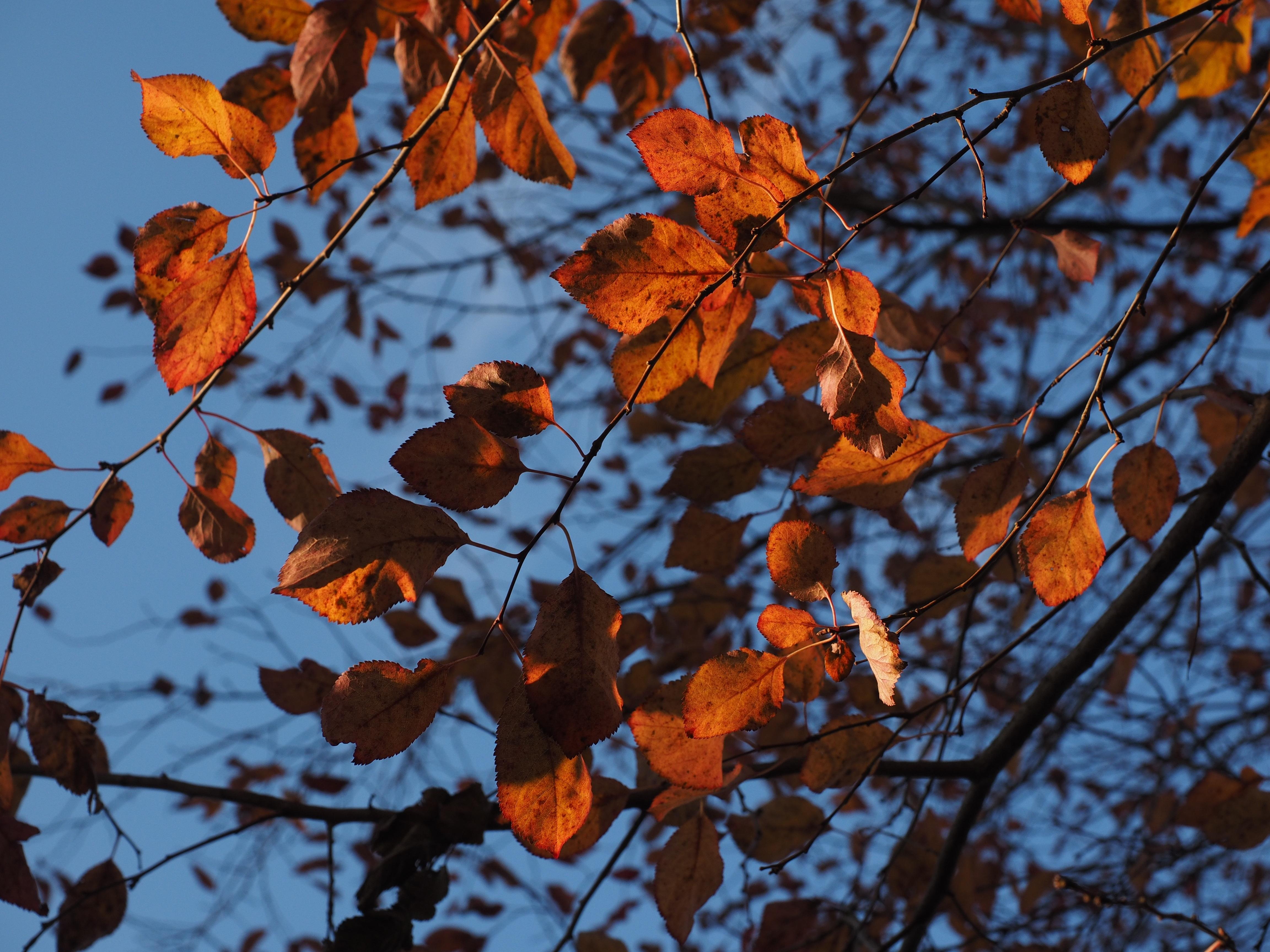 Free Fotobanka Priroda Vetev Slunecnim Svetlem Kvet Cervene
