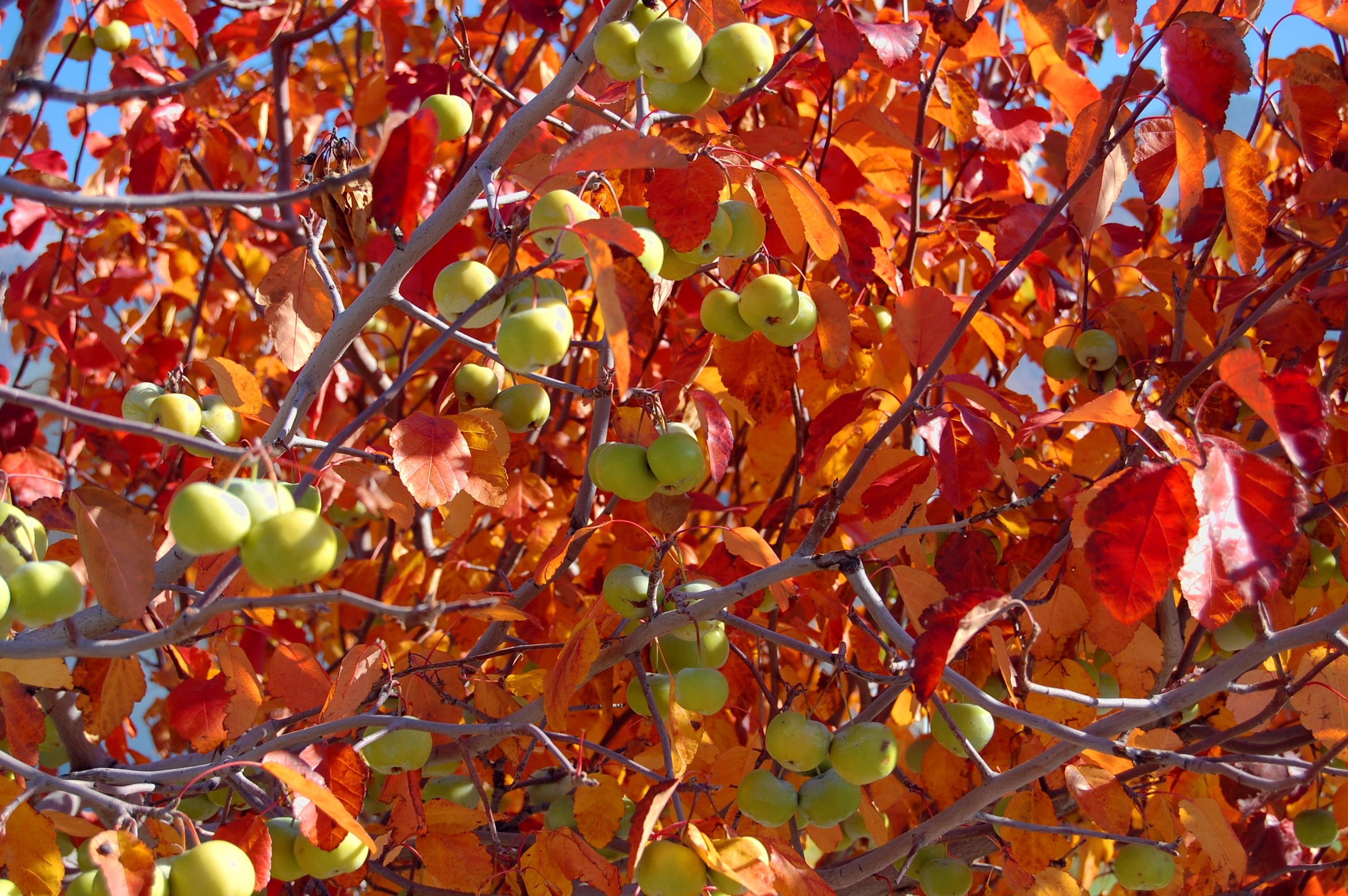 проходит картинка плоды и цветы на одном дереве года года как