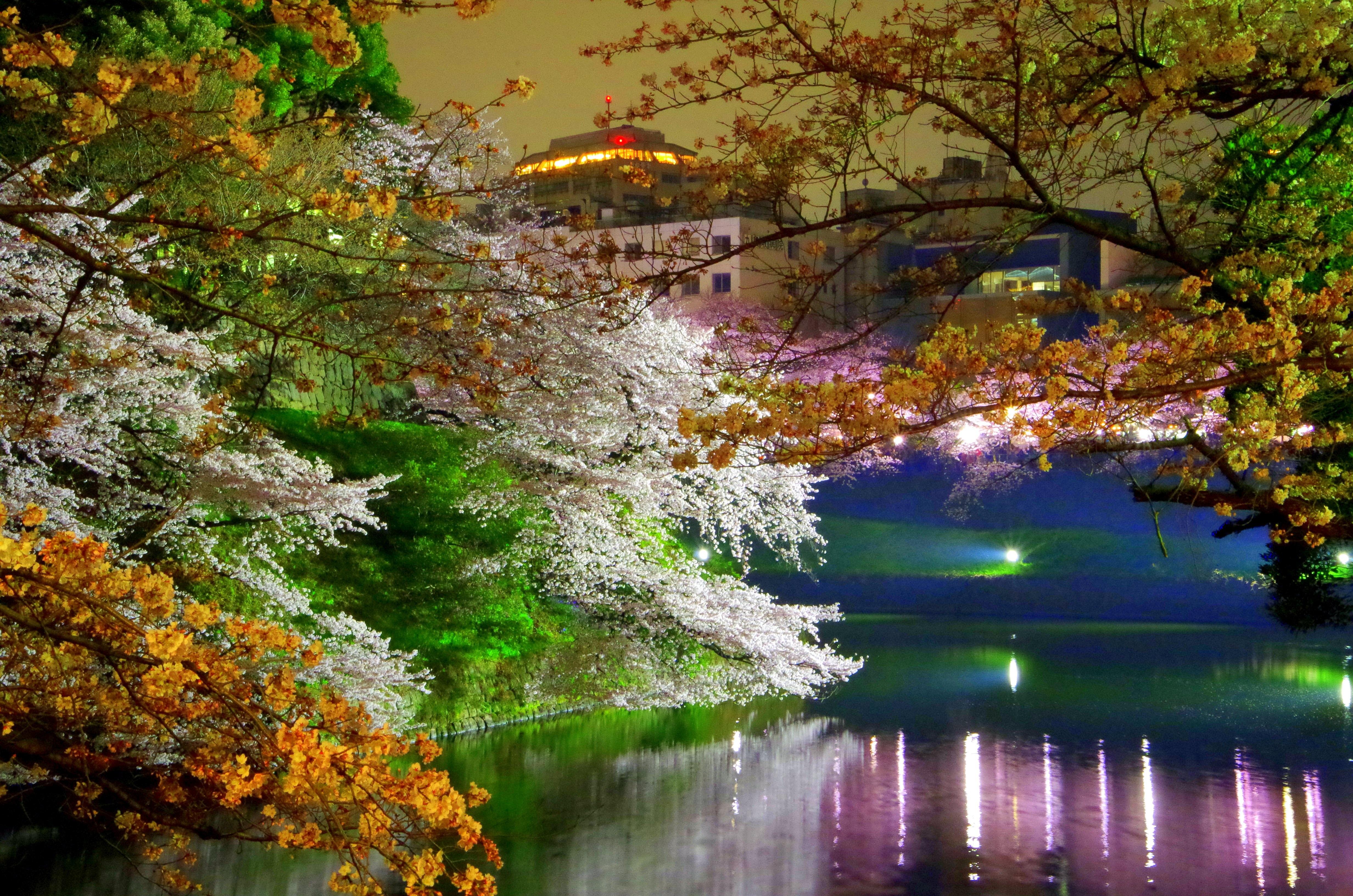 Gambar Pohon Alam Cabang Menanam Sinar Matahari Daun Sungai Kolam Musim Semi Refleksi