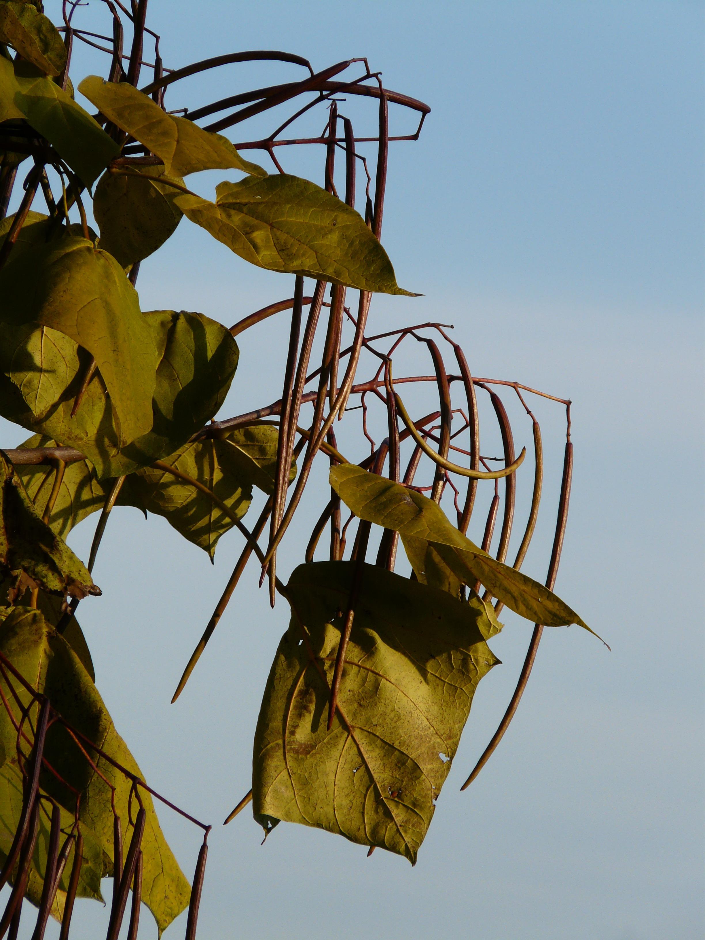 Images gratuites arbre la nature branche plante for Plante ligneuse