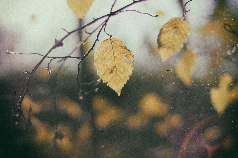 картинки осень листья падают дождь