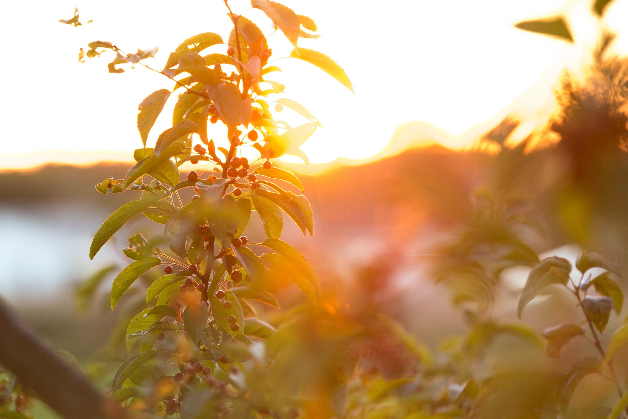изготовить осеннее солнечное утро картинки стена