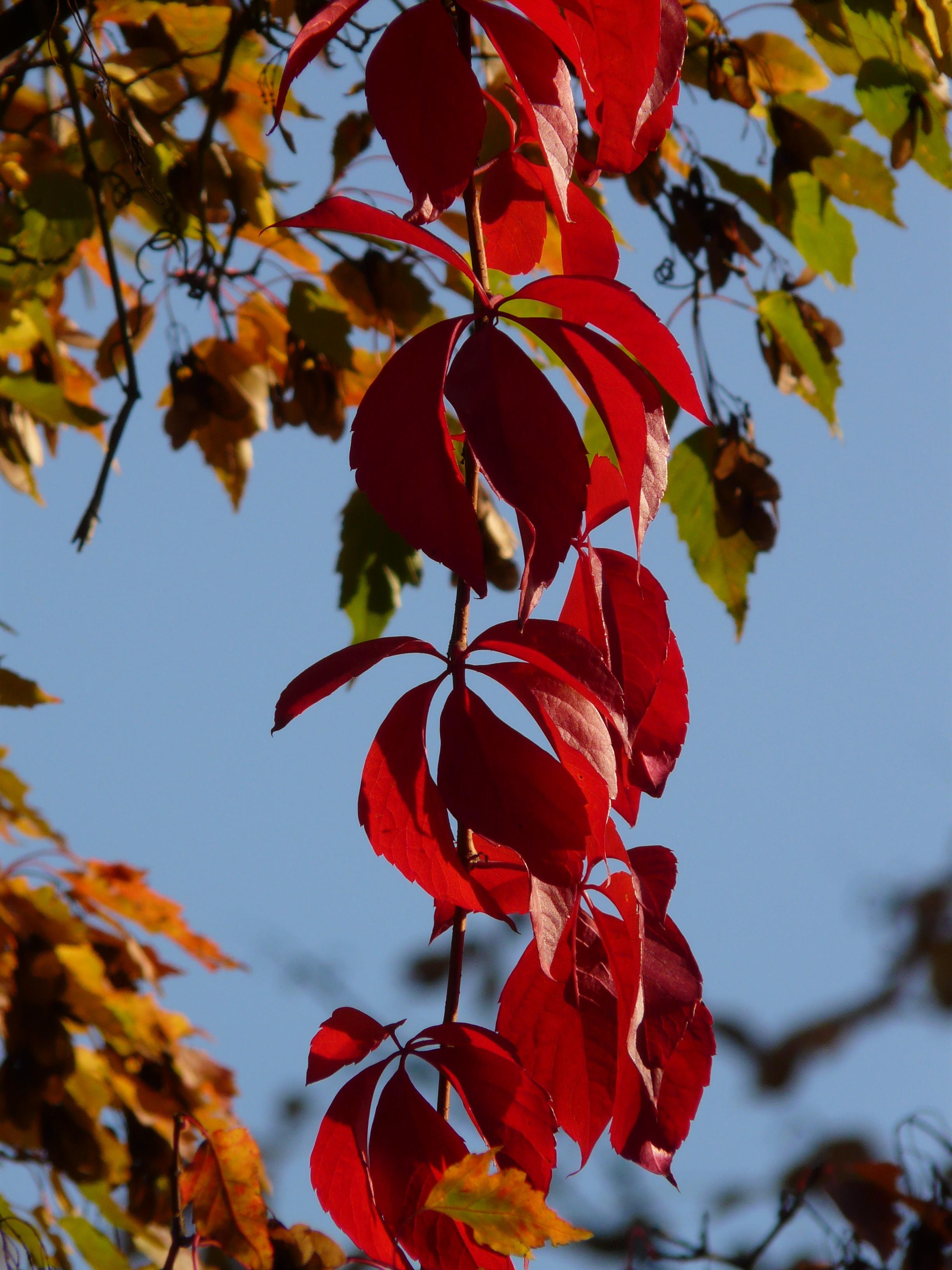 free images tree nature branch sunlight leaf flower petal