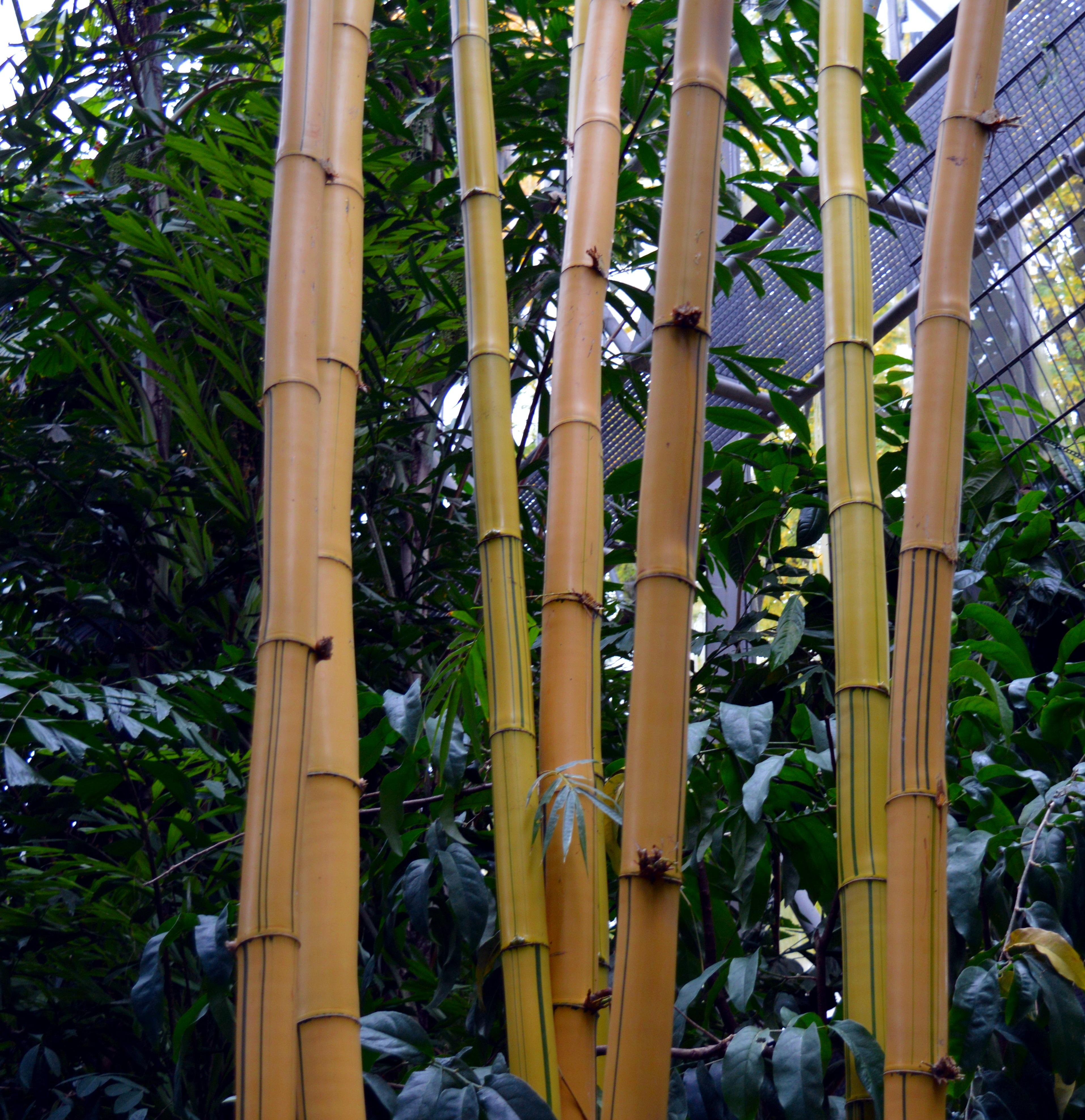 Images gratuites arbre la nature branche bois fleur tronc b che jungle tropical asie - Tronc de bambou decoratif ...