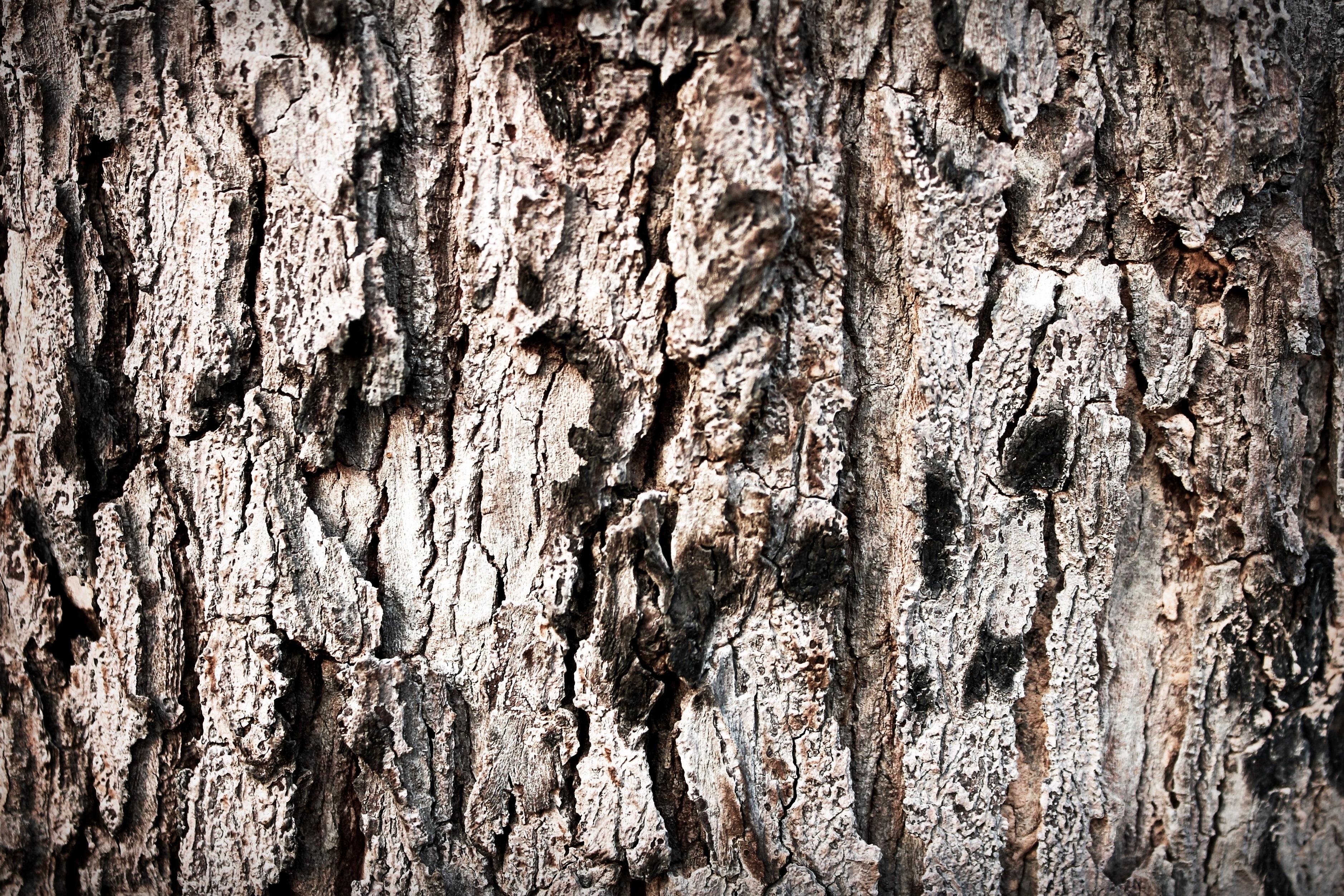 Kostenlose Foto : Baum, Natur, Ast, Holz, Boden, Textur, Blatt, Kofferraum,  Land, Sommer , Bildung, Trocken, Umwelt, Schmutz, Birke, Gebrochen, Riss,  Rau, ...