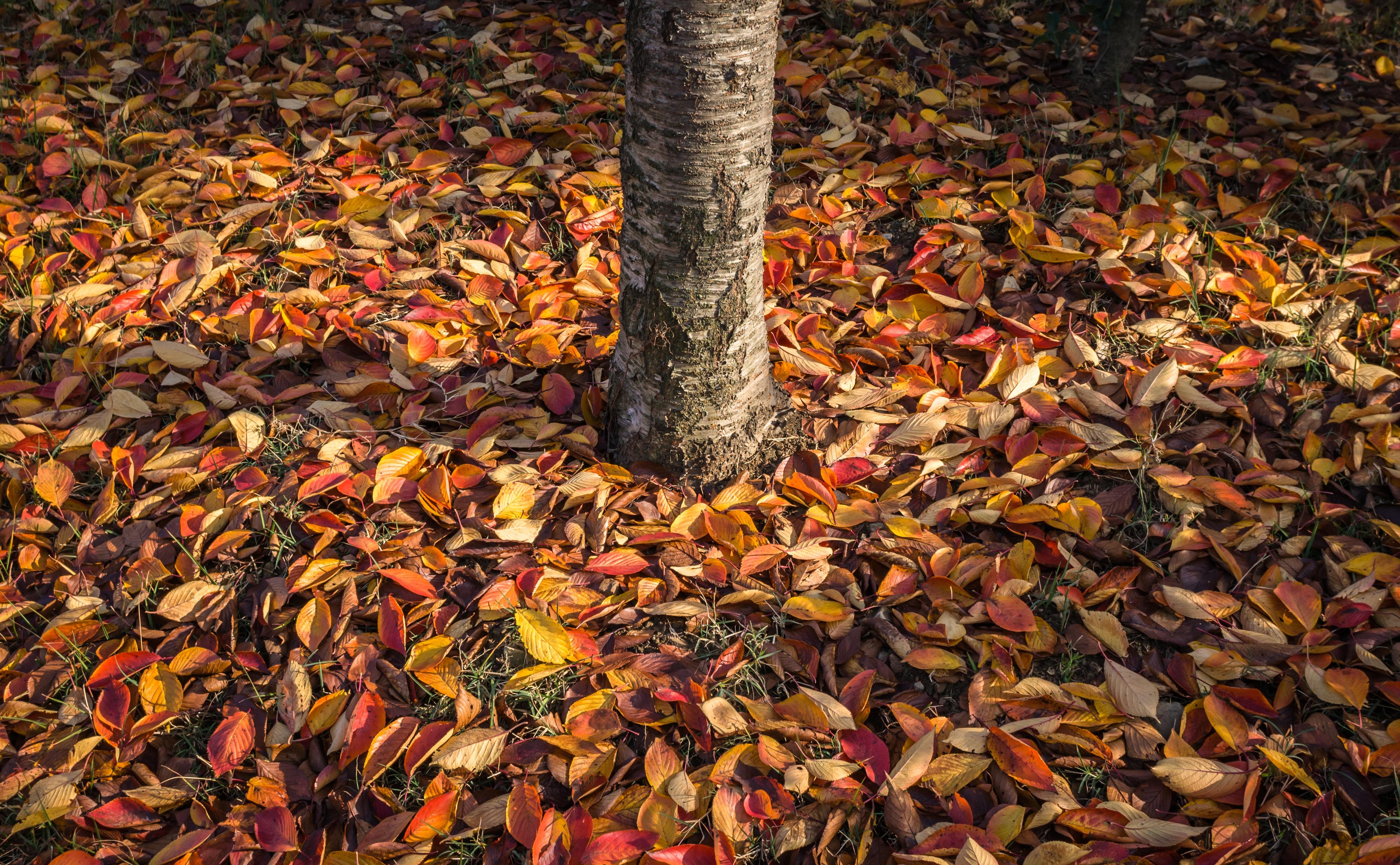 Картинки кучи листьев