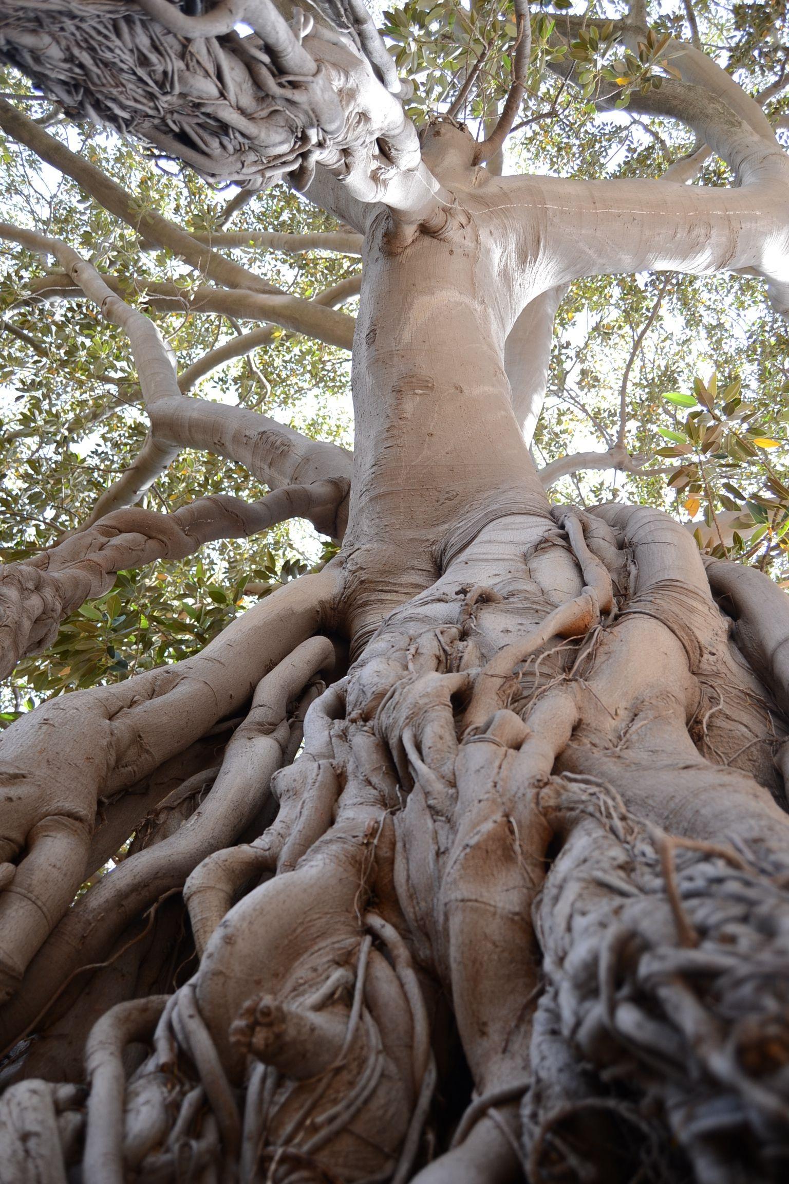 images gratuites arbre la nature branche plante bois feuille fleur tronc statue. Black Bedroom Furniture Sets. Home Design Ideas