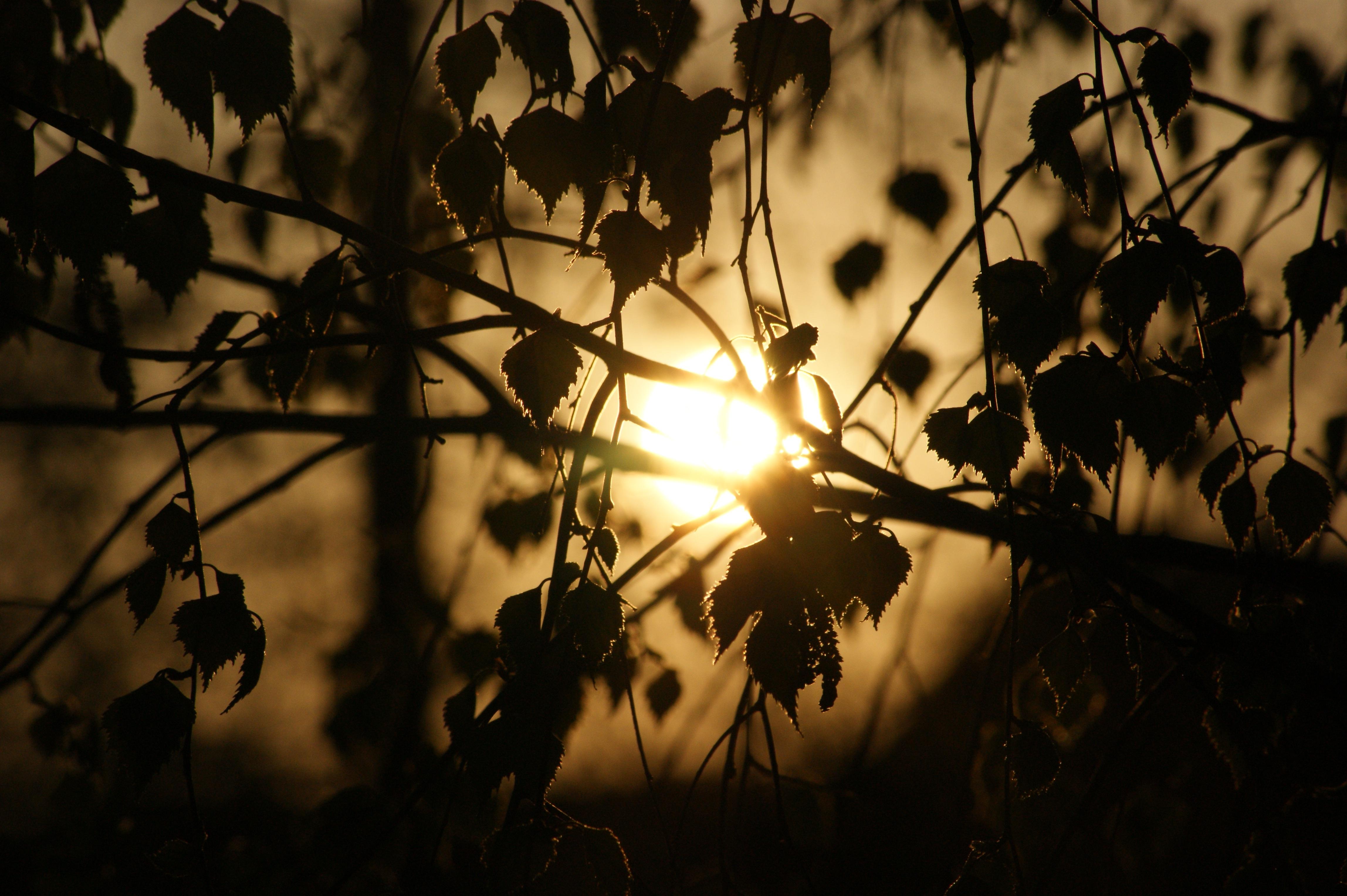 Gratis Afbeeldingen : boom, natuur, tak, silhouet, zonsondergang ...