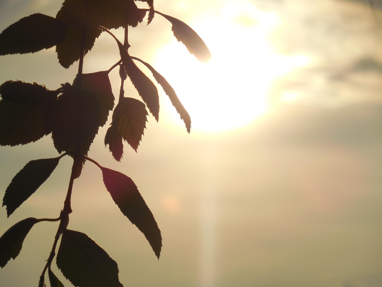 Gambar Pohon Alam Cabang Bayangan Hitam Garis Besar
