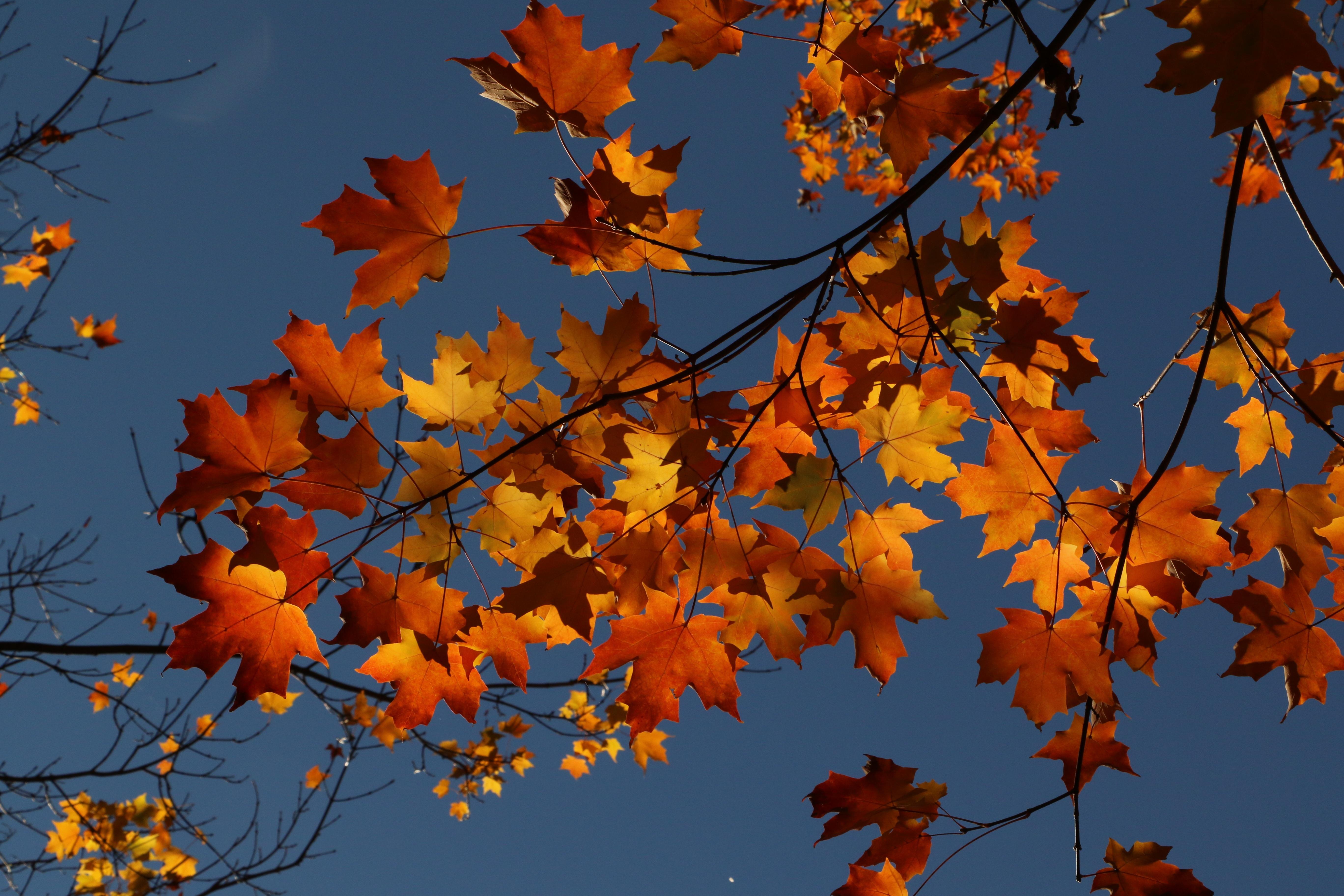 осенние листья и деревья фото сих