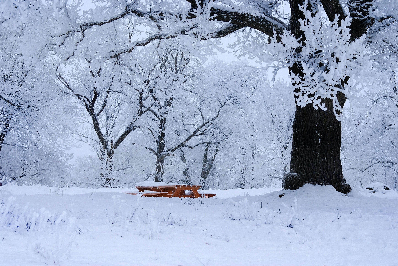 картинка про холод зима эту тему нашем