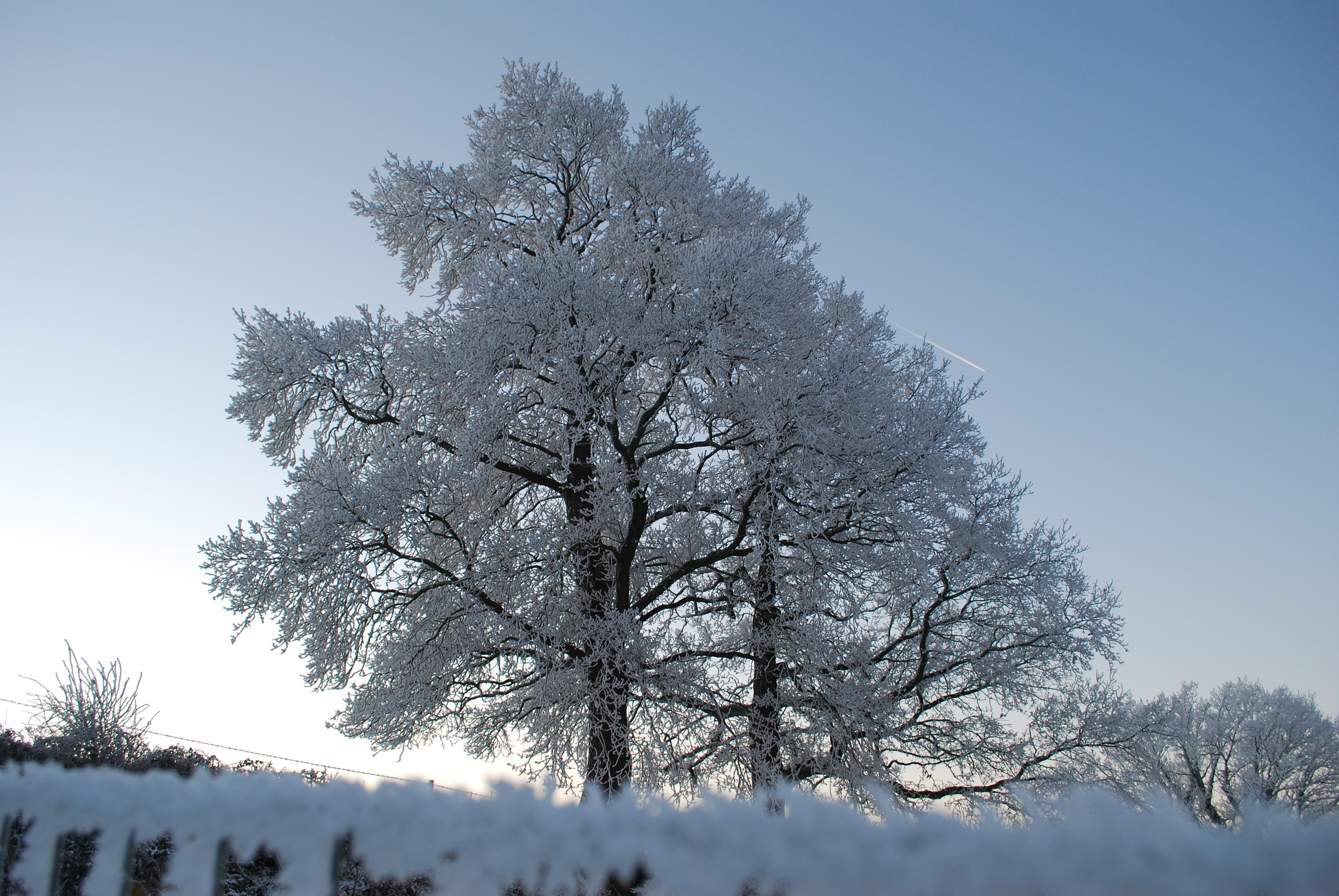 картинка дерево зимой без снега используют, где